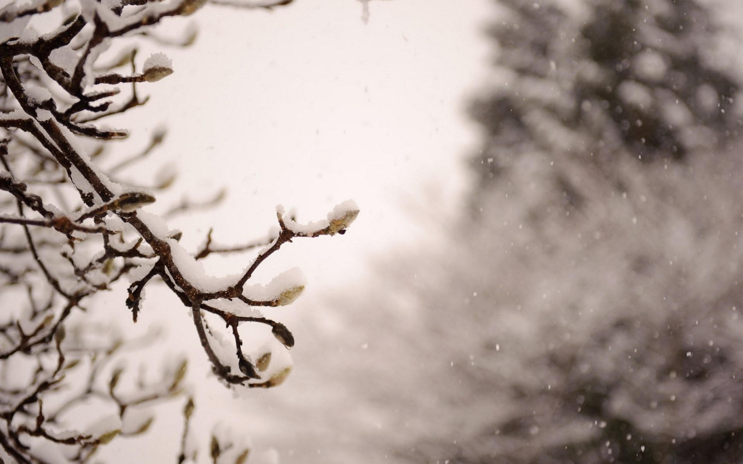 Japan nature winter snow trees wallpaper | | 417234 | WallpaperUP