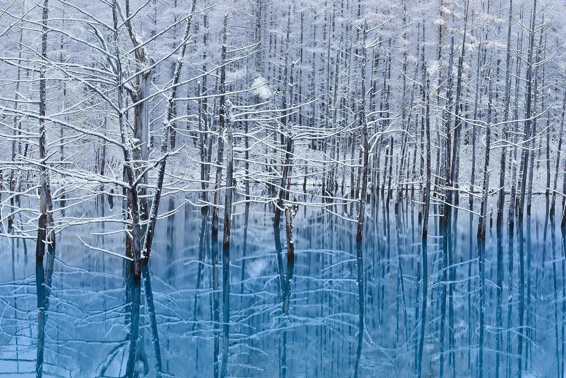 japan island hokkaido winter tree snow water reflection