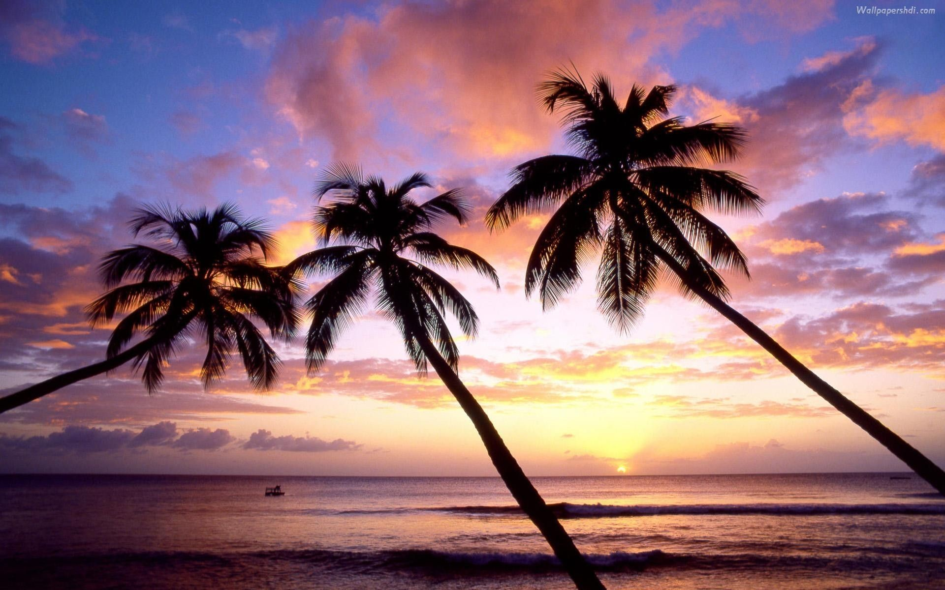 Wallpaper Palm Tree – Android Apps on Google Play