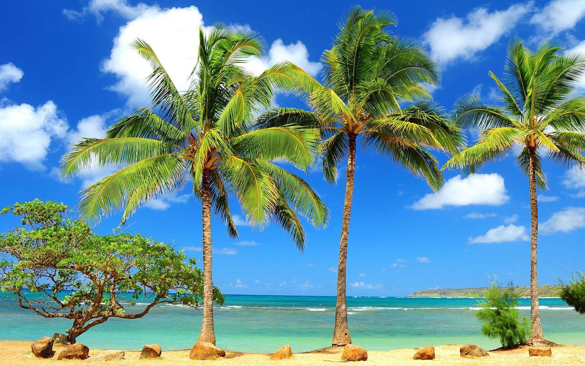 Beach Palm Trees wallpaper – 1131862