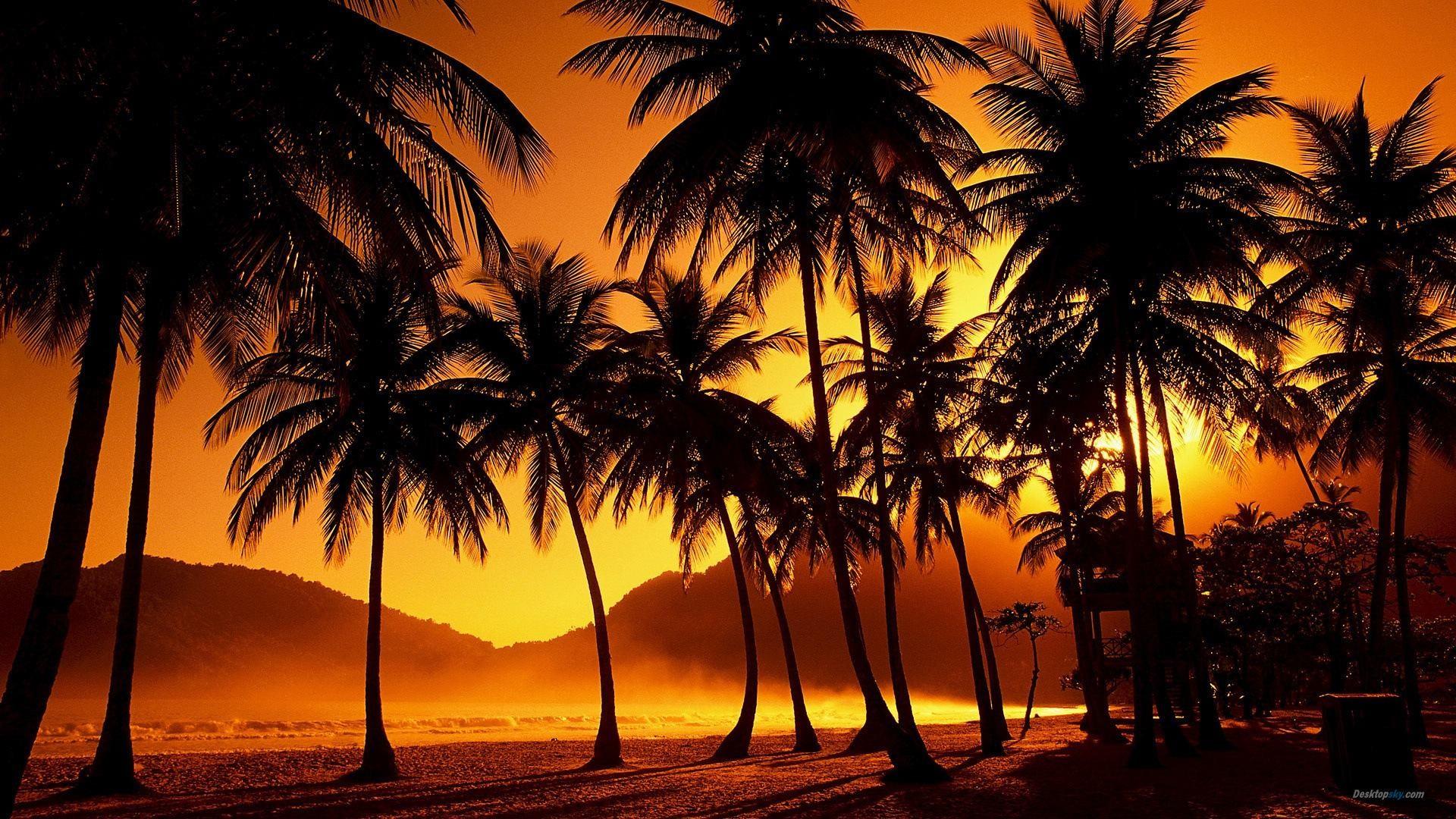Beautiful Palm Tree Wallpaper