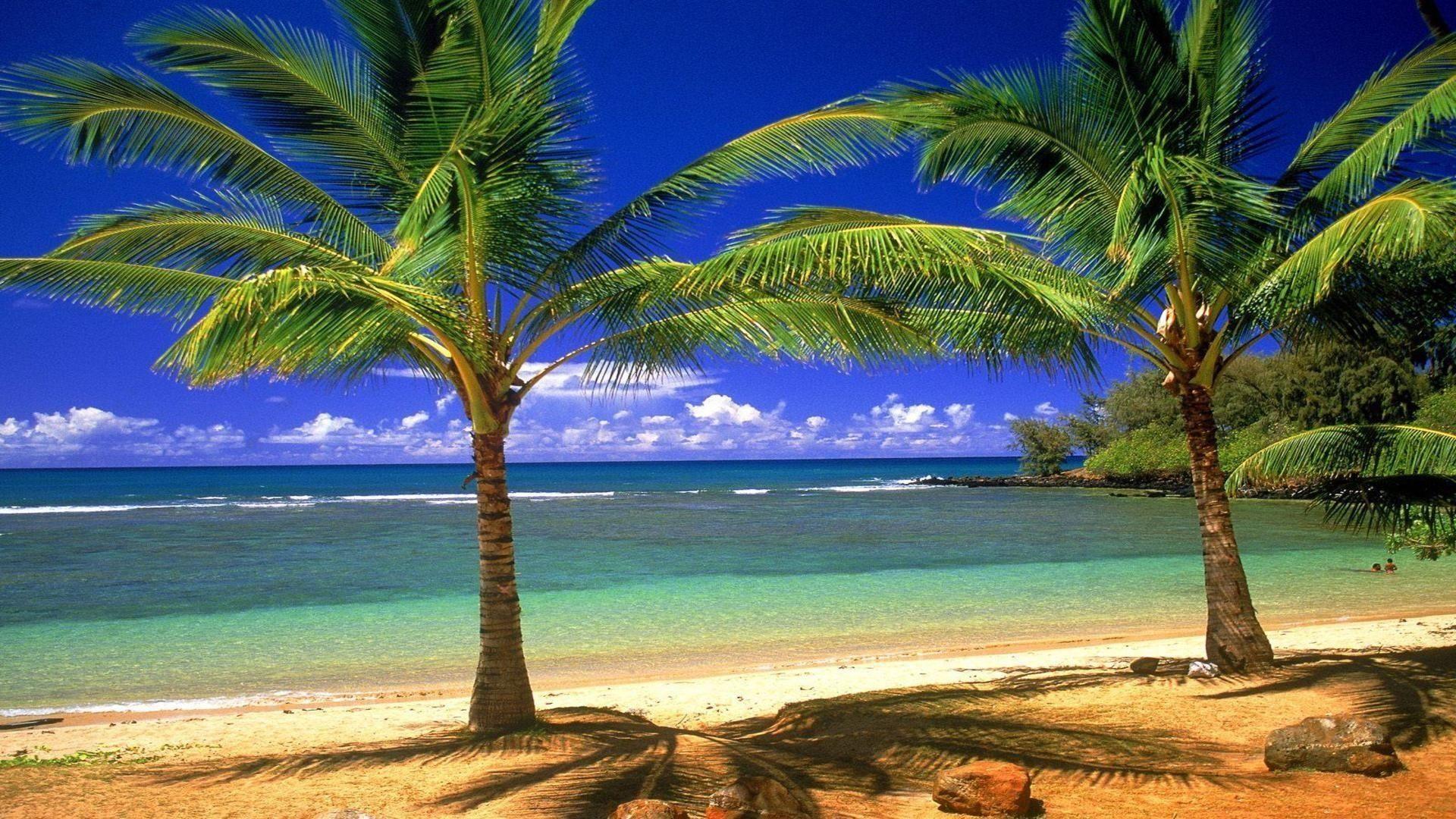free desktop beach palm tree wallpapers