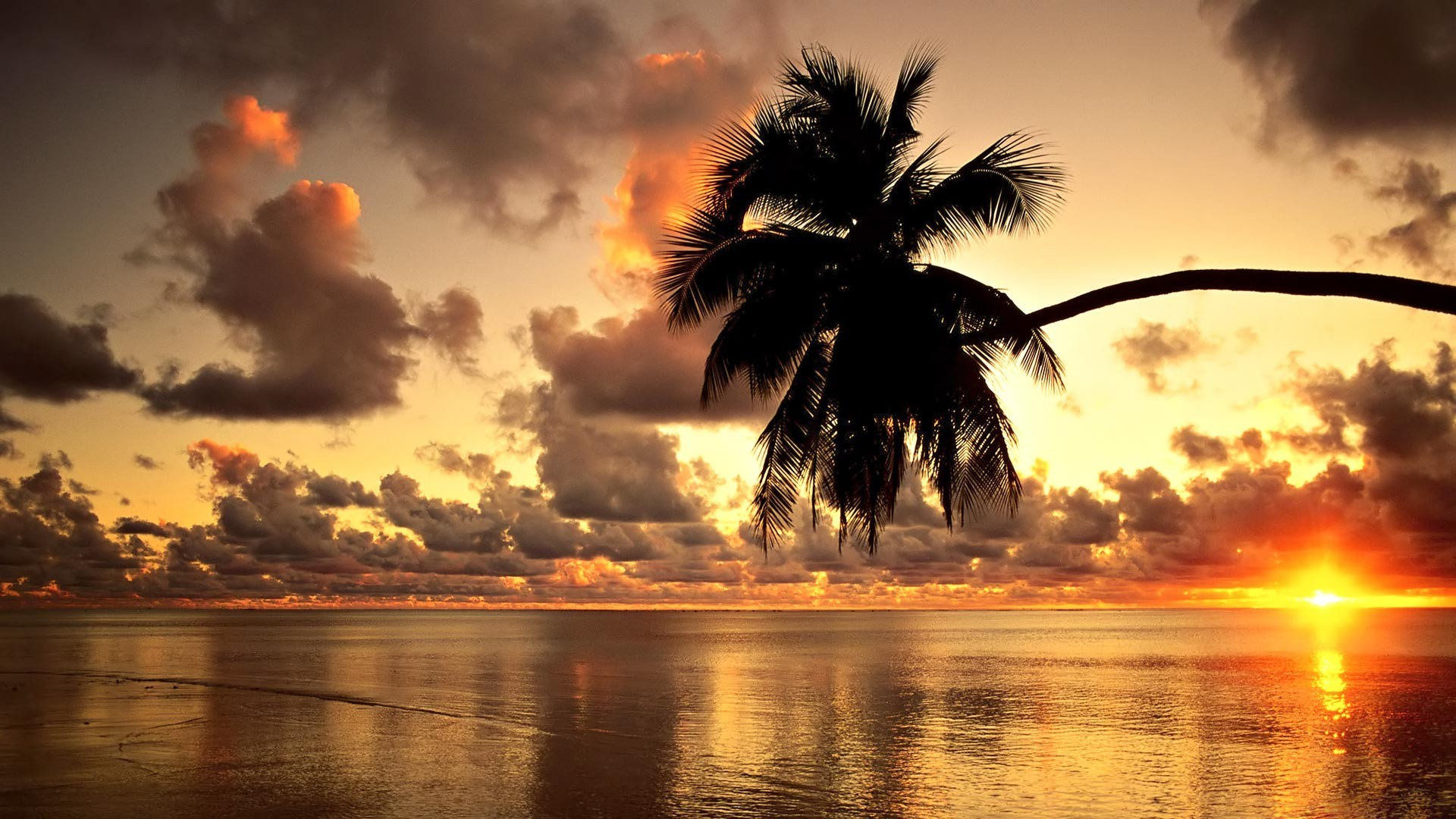 Beach Palm Tree Sunset Wallpaper Hd Wallpapers in 1920x1080px