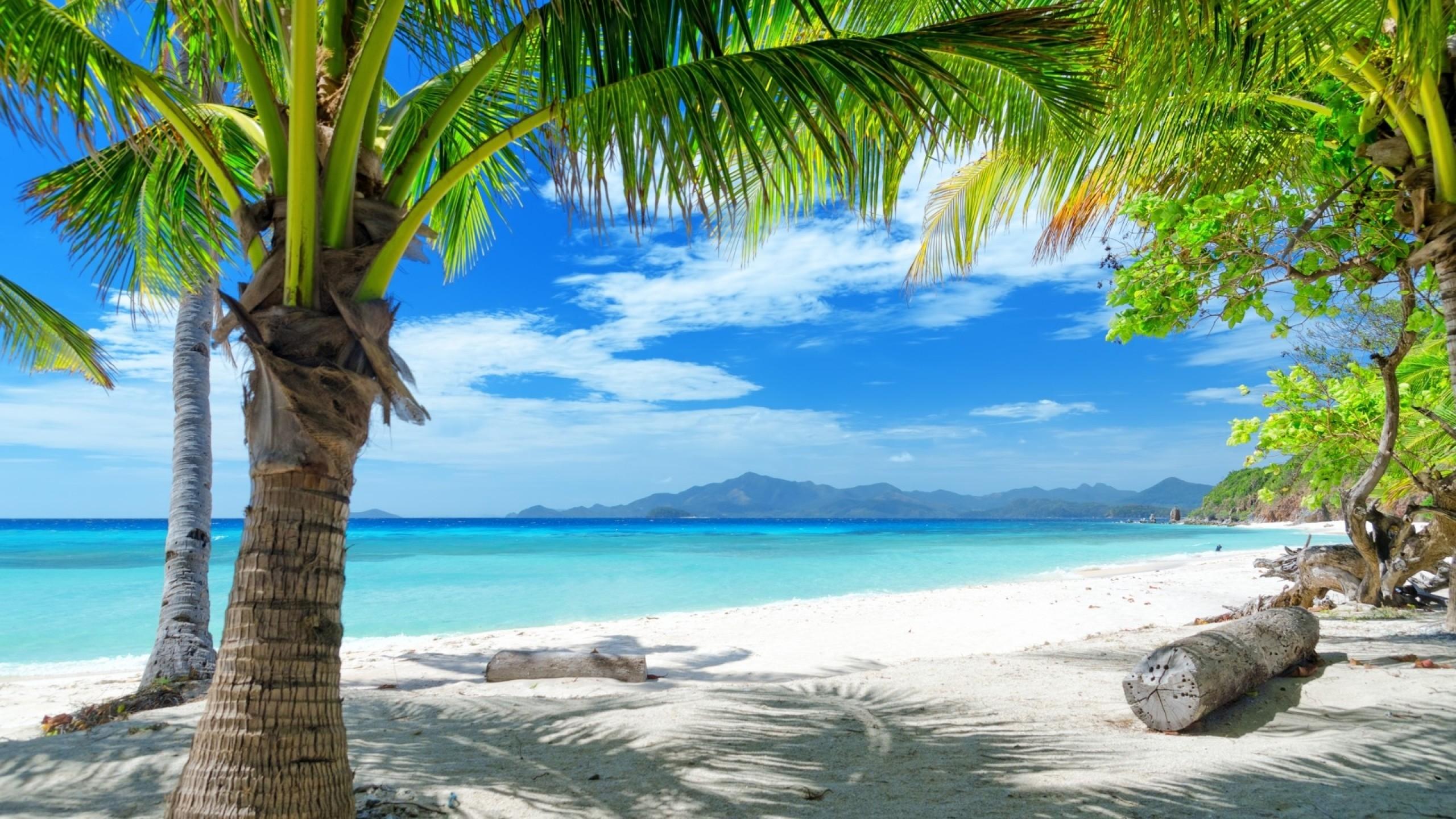 Wallpaper tropics, beach, sand, palm trees