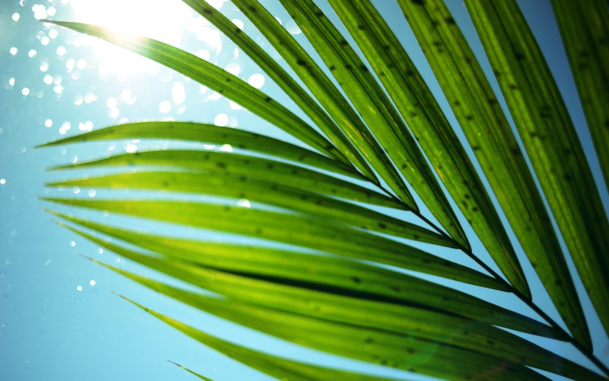 palm tree wallpapers for mac free