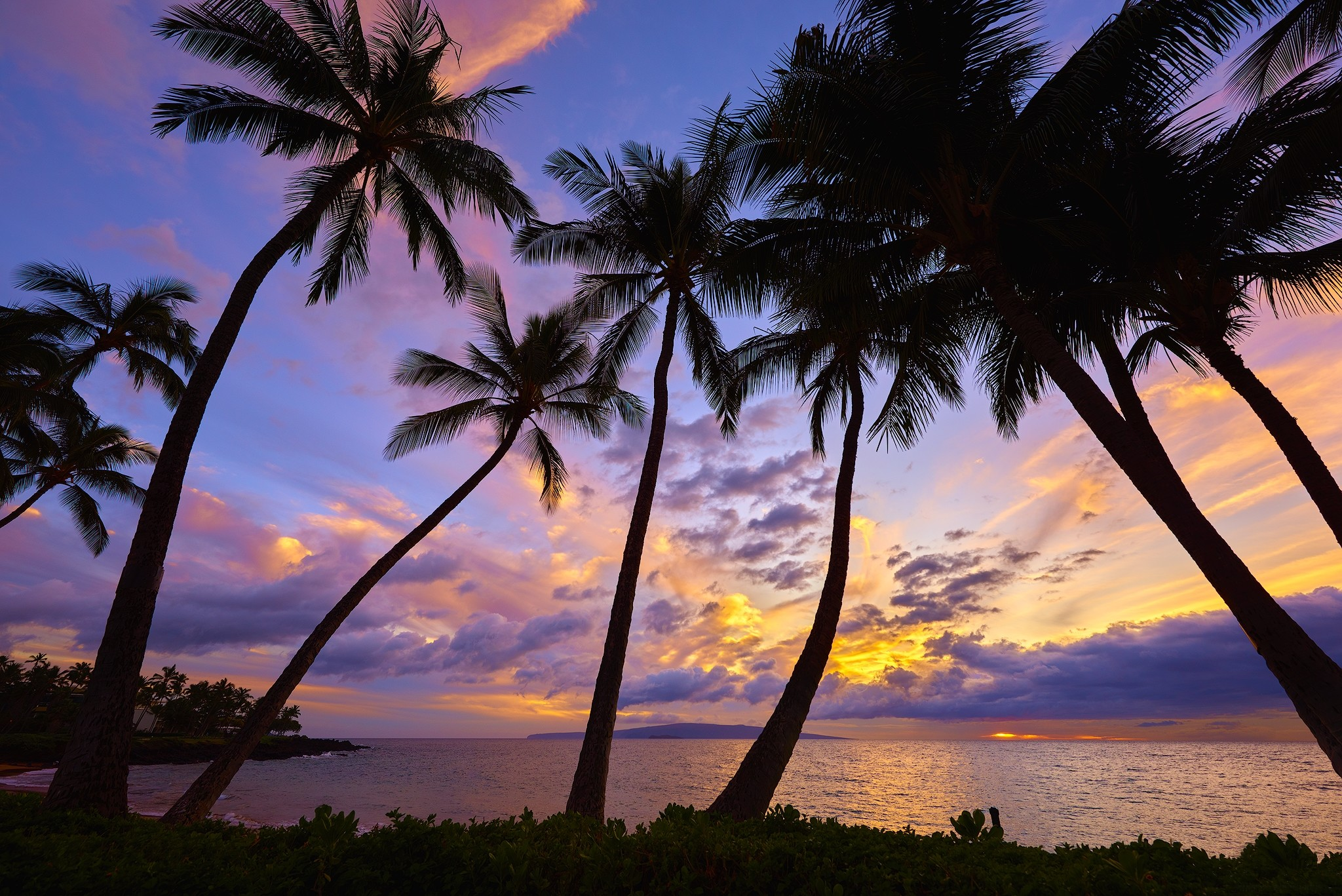 Earth – Palm Tree Earth Tree Silhouette Ocean Sea Tropical Sunset Horizon  Wallpaper