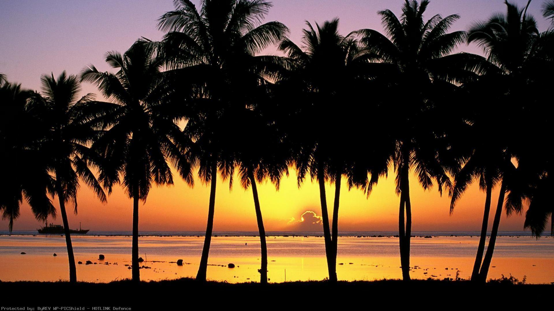 Desktop-Palm-Tree-HD-wallpaper-wp6005303