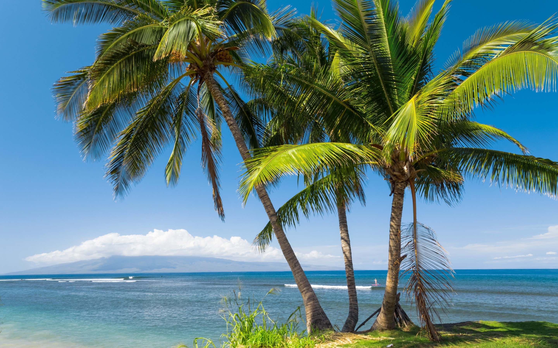 USA, Hawaii, sea, beach, palm tree, sun, tropics, palm
