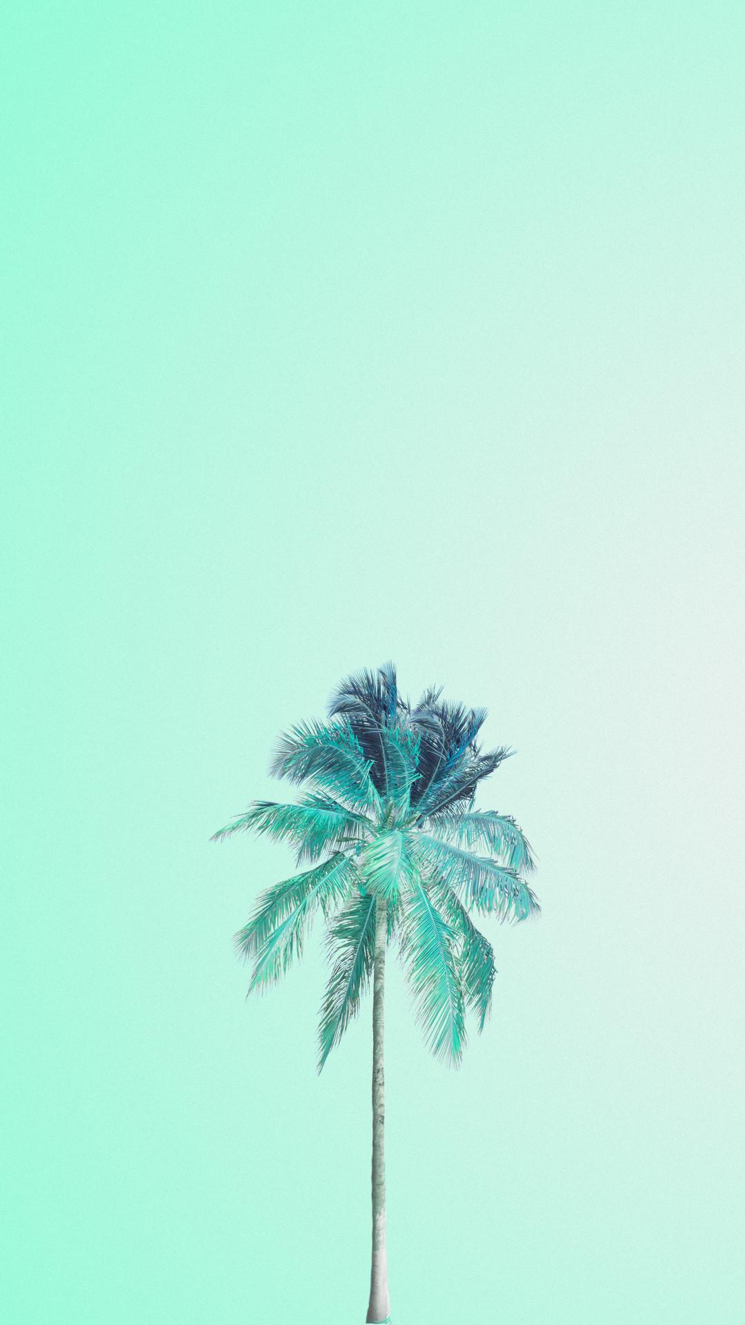 Mint green palm tree iphone wallpaper phone background lock screen
