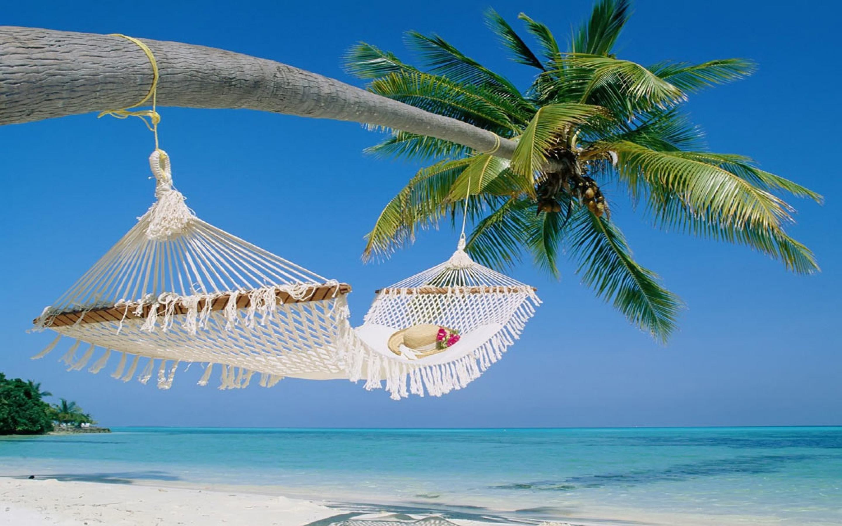 preview wallpaper maldives beach palm trees maldives tropical beach palm  tree with hammock wallpaper in high …