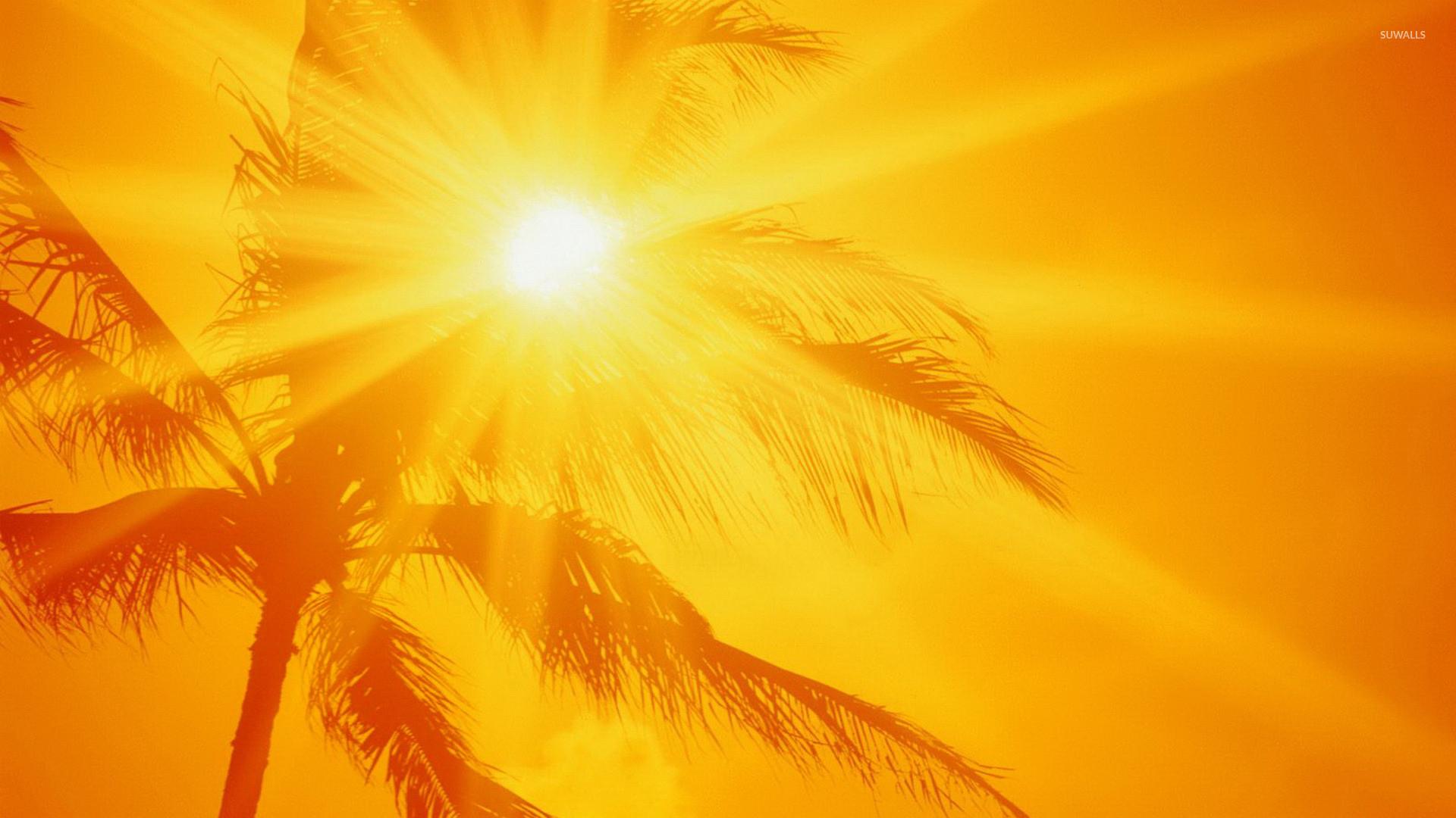… sunlit palm tree wallpaper artistic wallpapers 20566 …