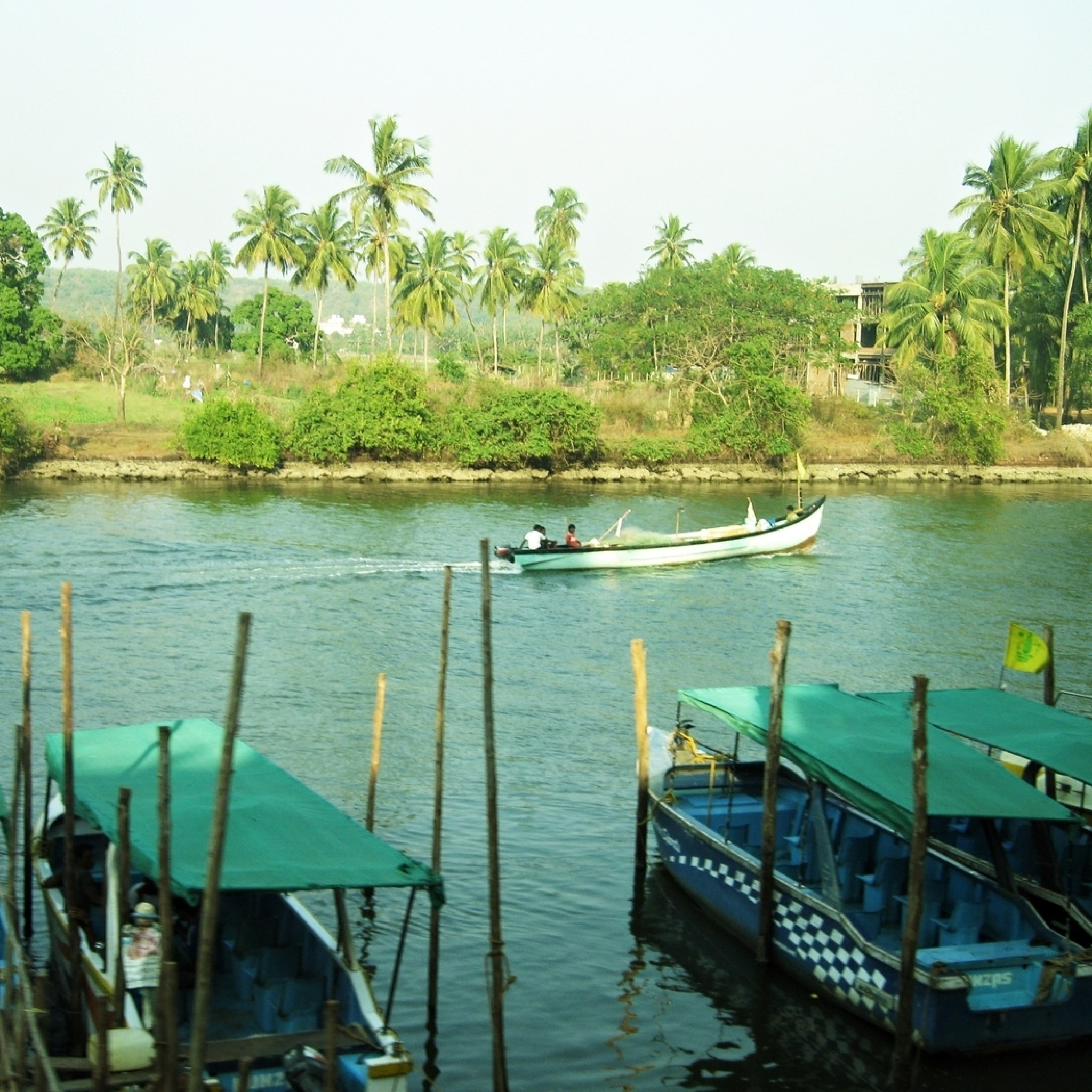Preview wallpaper palm trees, boat, river, water, india, goa 2048×2048