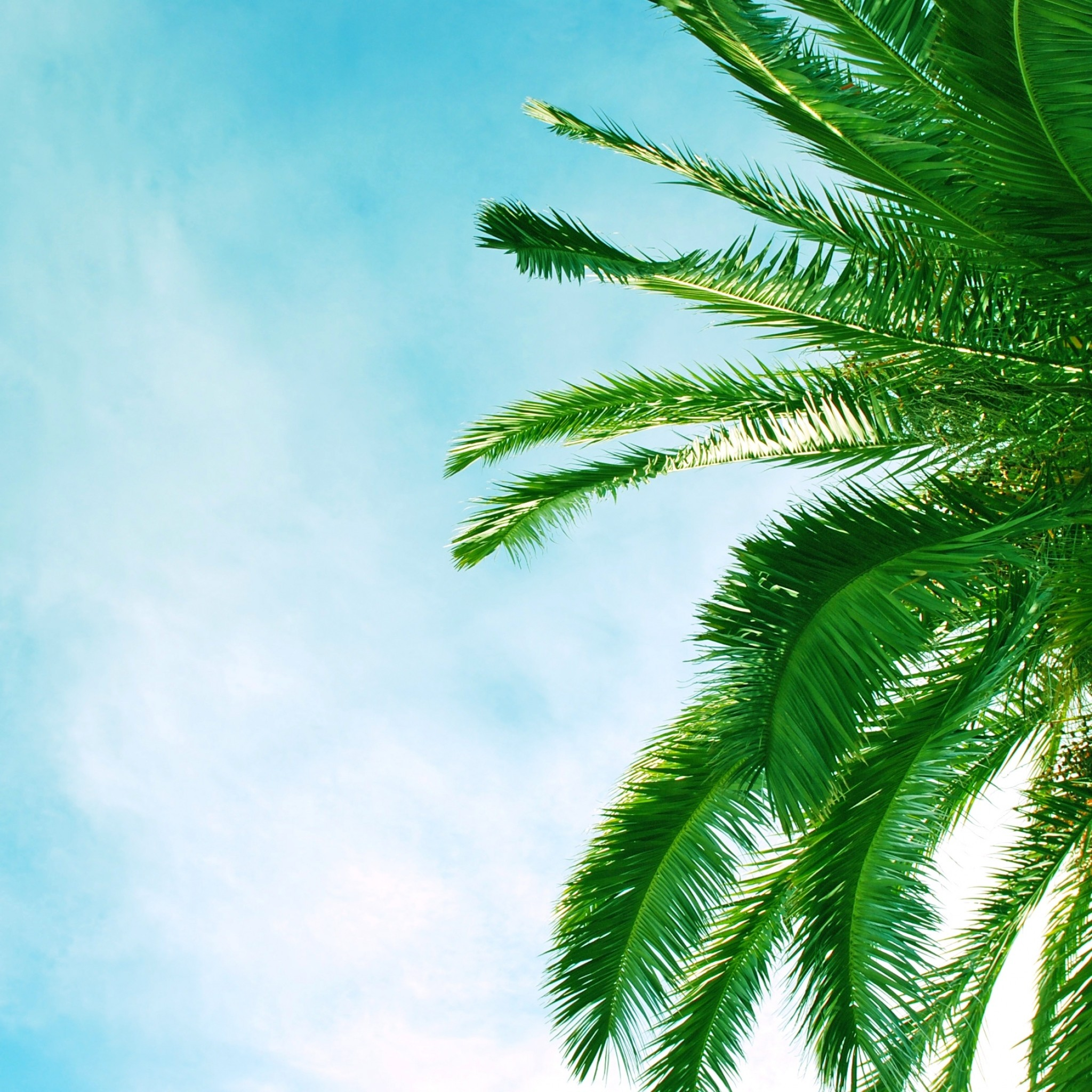 Wallpaper palm tree, krone, branches, leaves, clouds, sky, azure