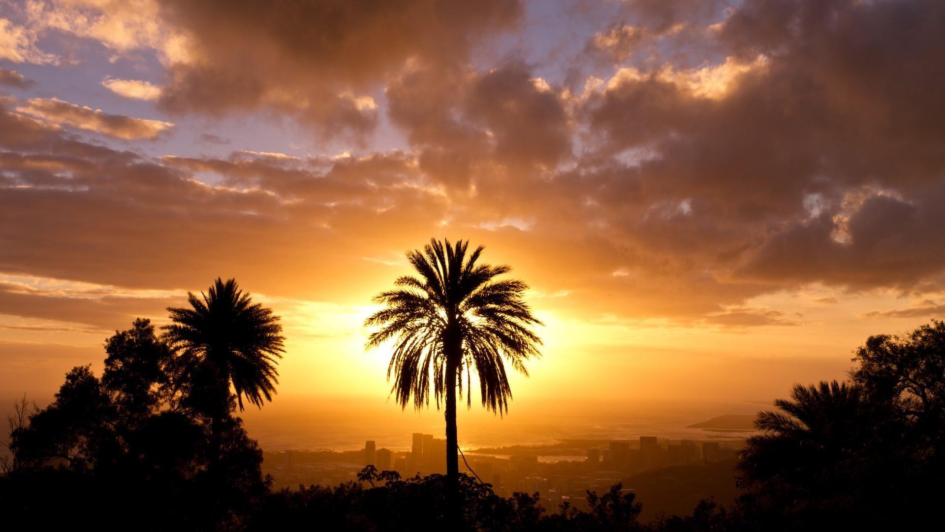 Title. Palm tree …