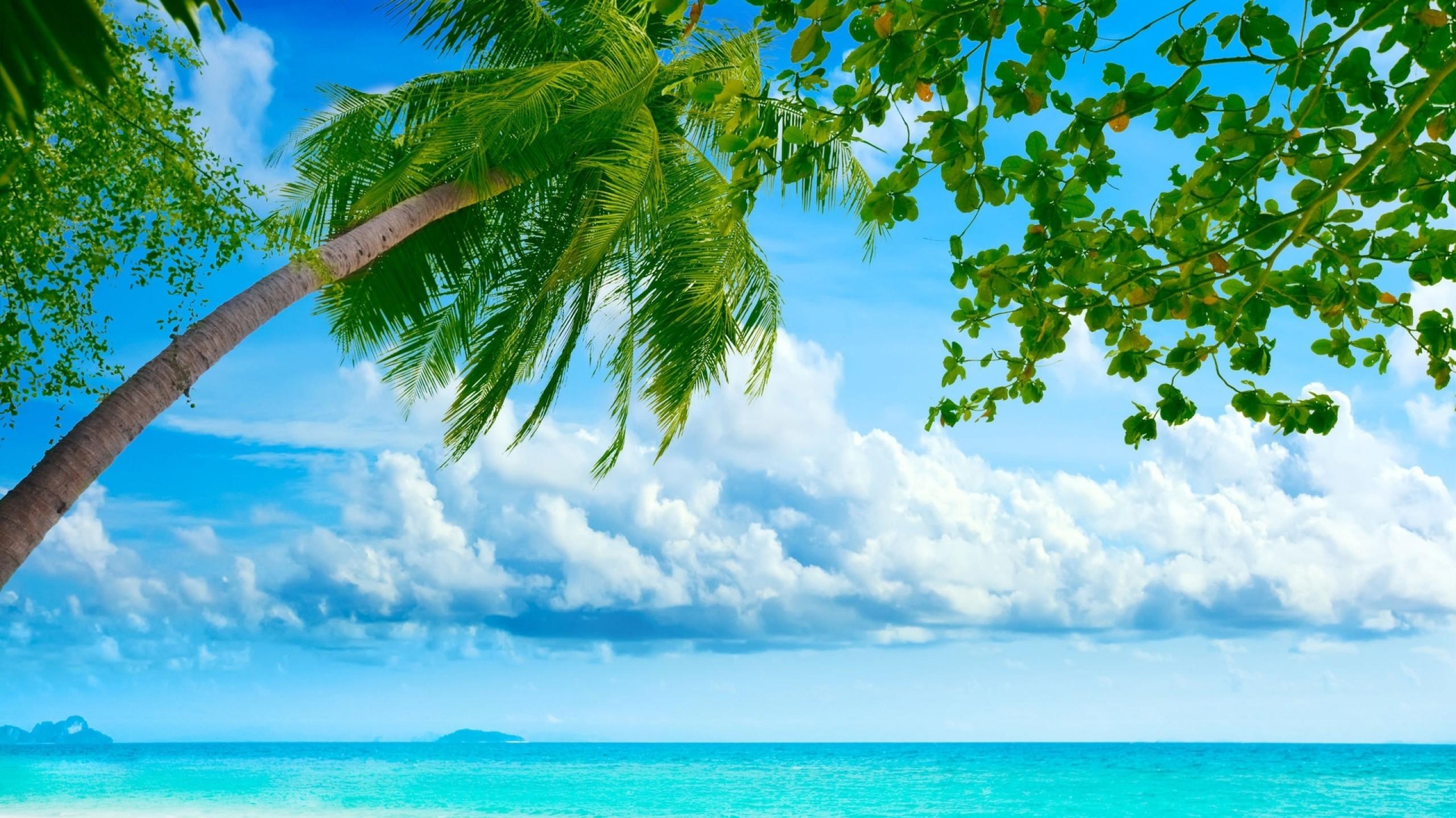 Preview wallpaper palm tree, coast, blue water, tropics, resort, relax,