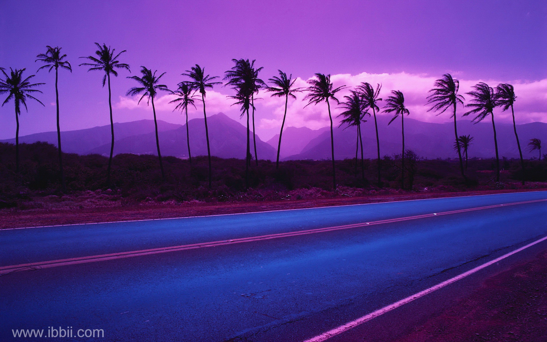 Palm Trees Lining Highway – – Rights Managed – Stock Photo – Corbis