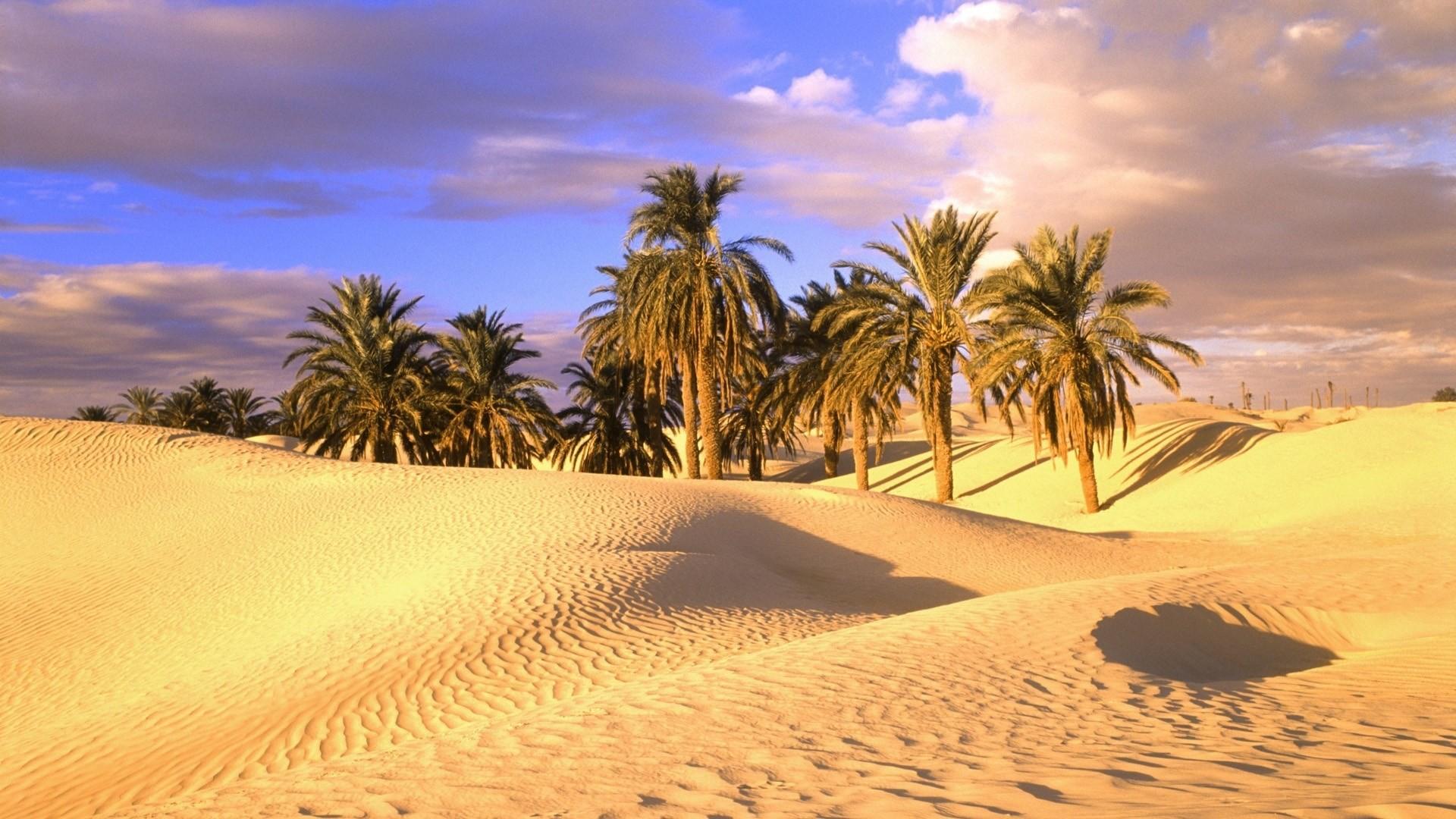 palm tree wallpaper pack 1080p hd