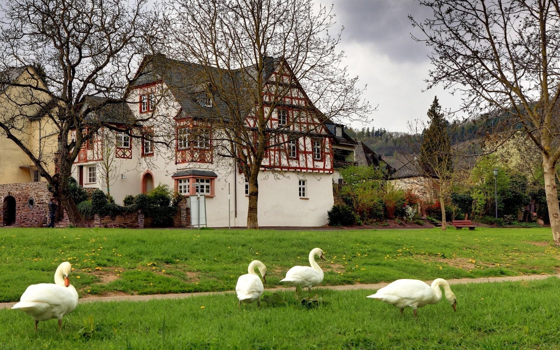 germany village swans tree grass bench landscape
