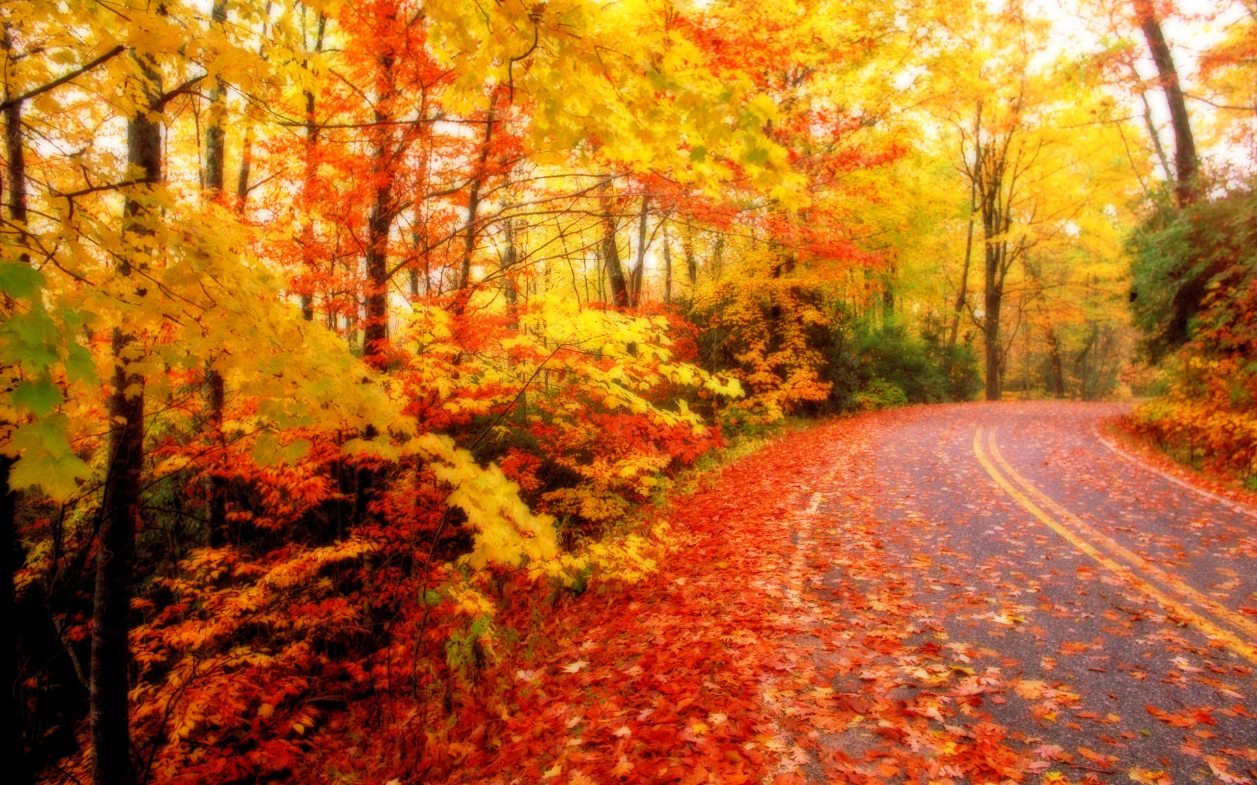 Wallpapers For > Autumn Leaves Desktop Backgrounds