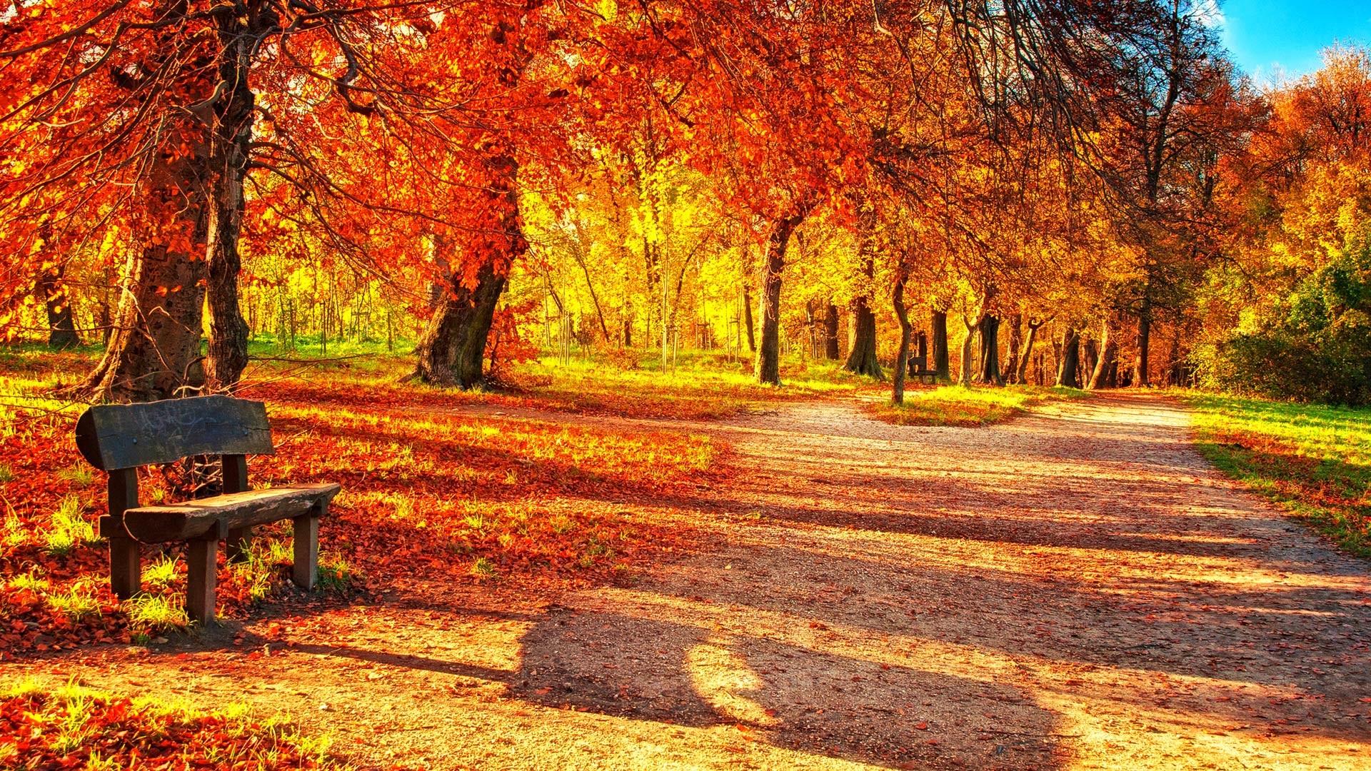 Download Autumn Leaves Wallpaper Desktop #x0ray » hdxwallpaperz.com