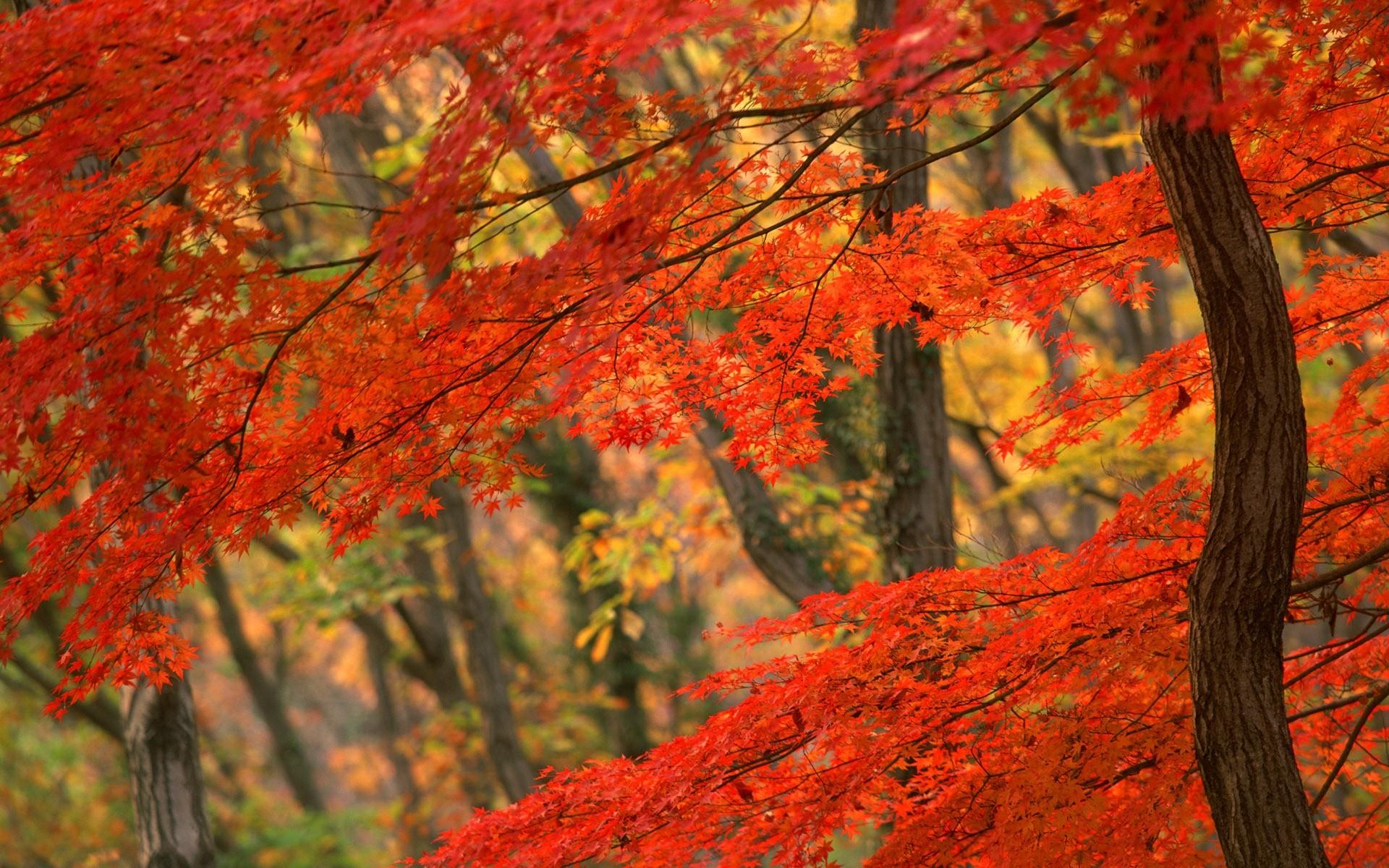 Autumn Leaves Wallpaper for Desktop – Uncalke.com