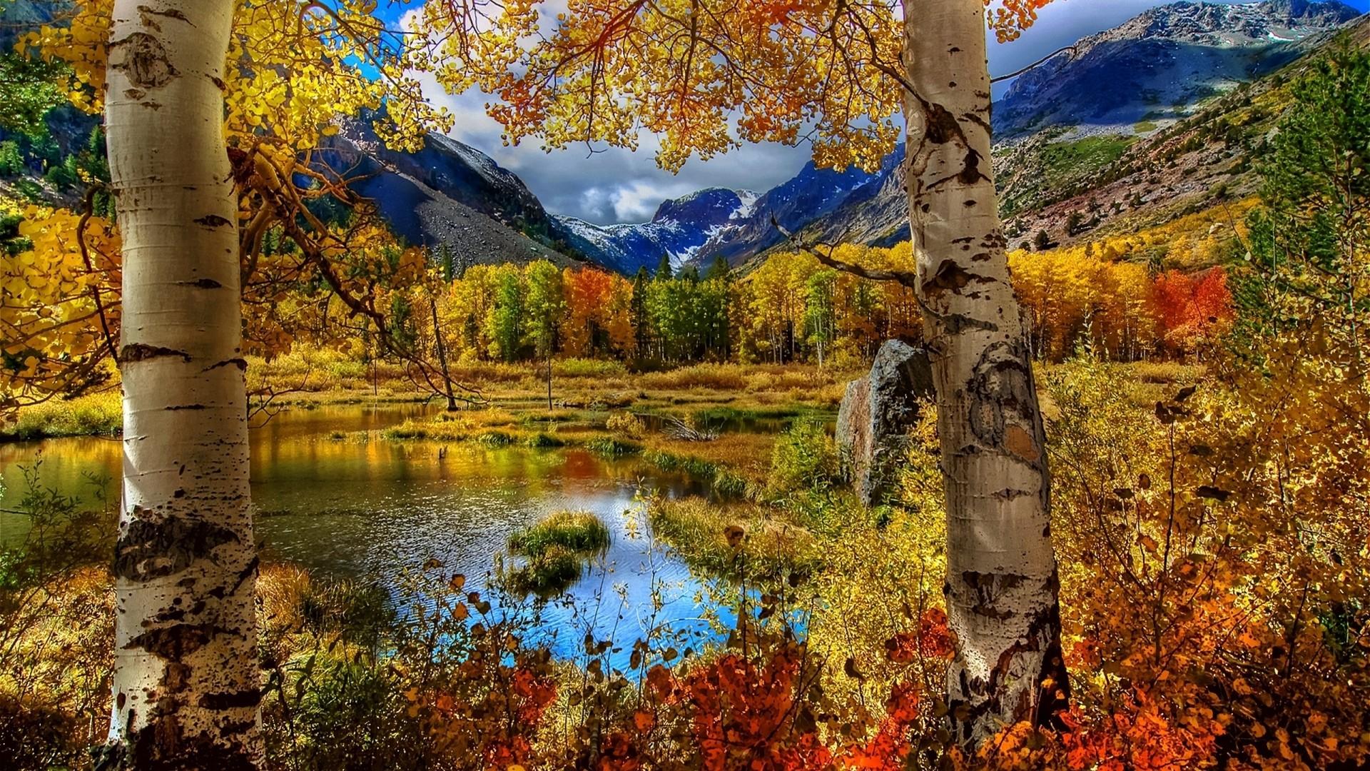 Preview wallpaper autumn, birch, color, paint, plants, pond, mountain,