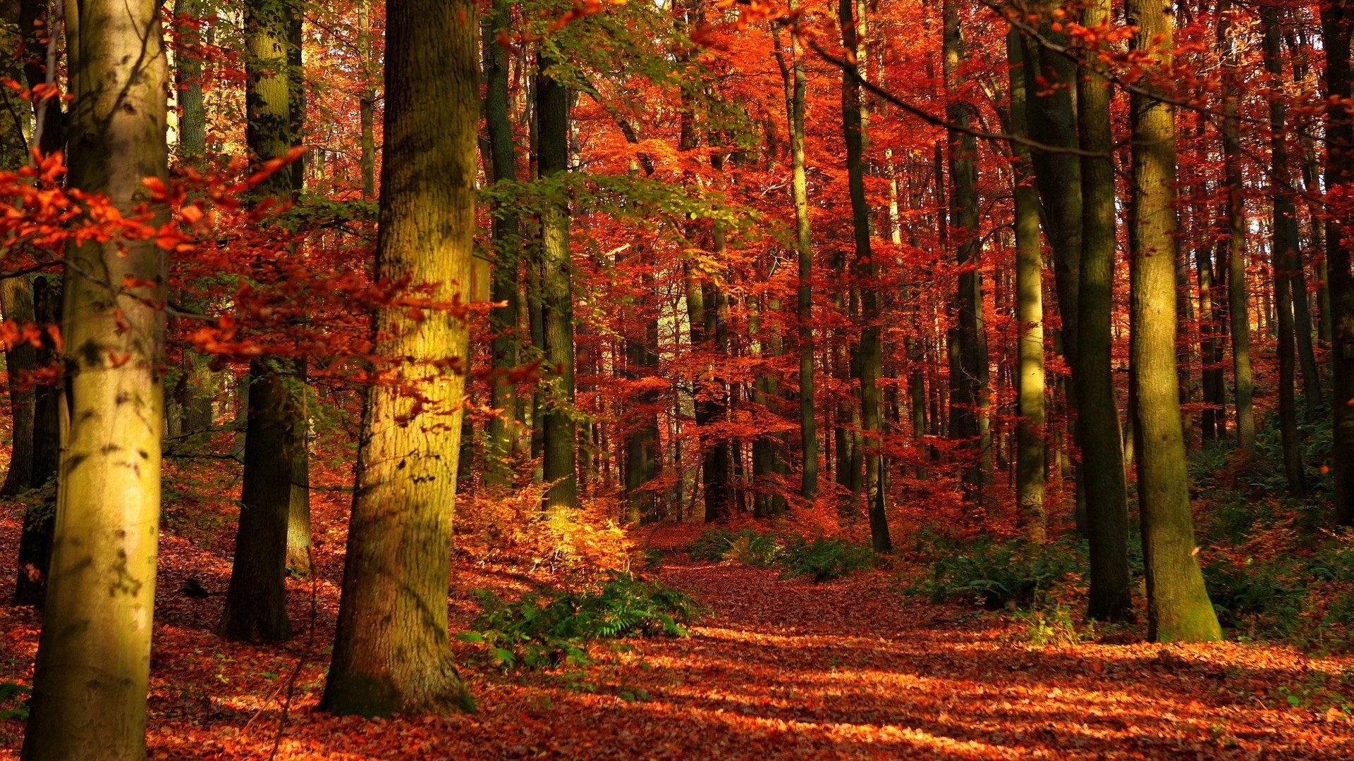 Preview wallpaper autumn, wood, leaves, trees, red, gleams 1920×1080