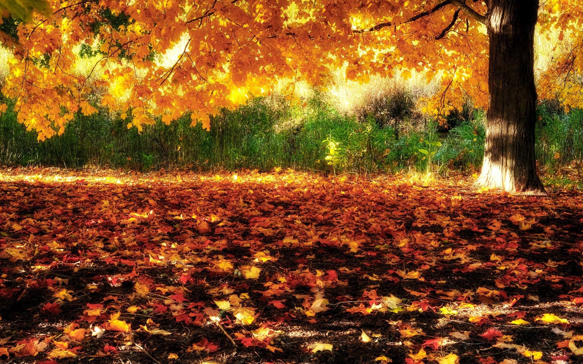Fall of Autumn Leaves Desktop Wallpaper | Download High Resolution .