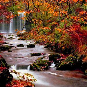 Autumn Leaves Desktop