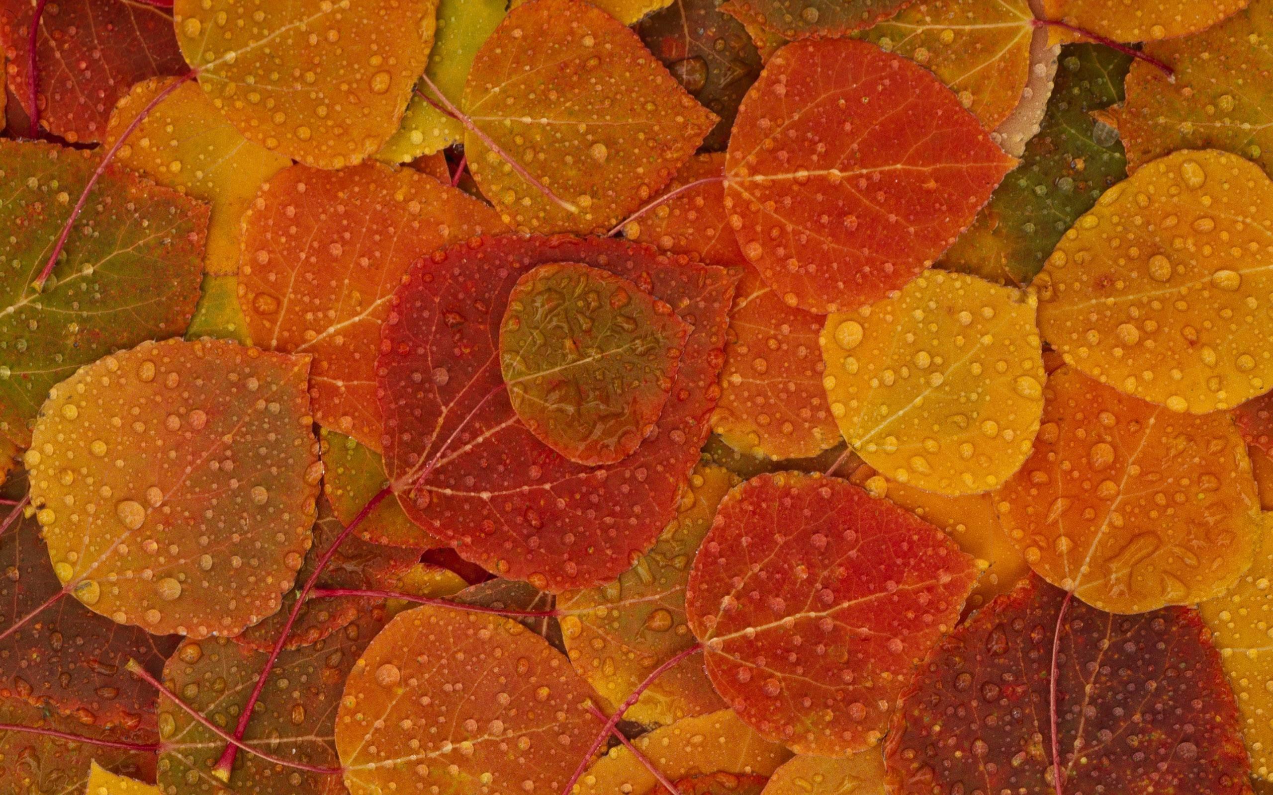 Water drops on leaves desktop wallpaper 15700
