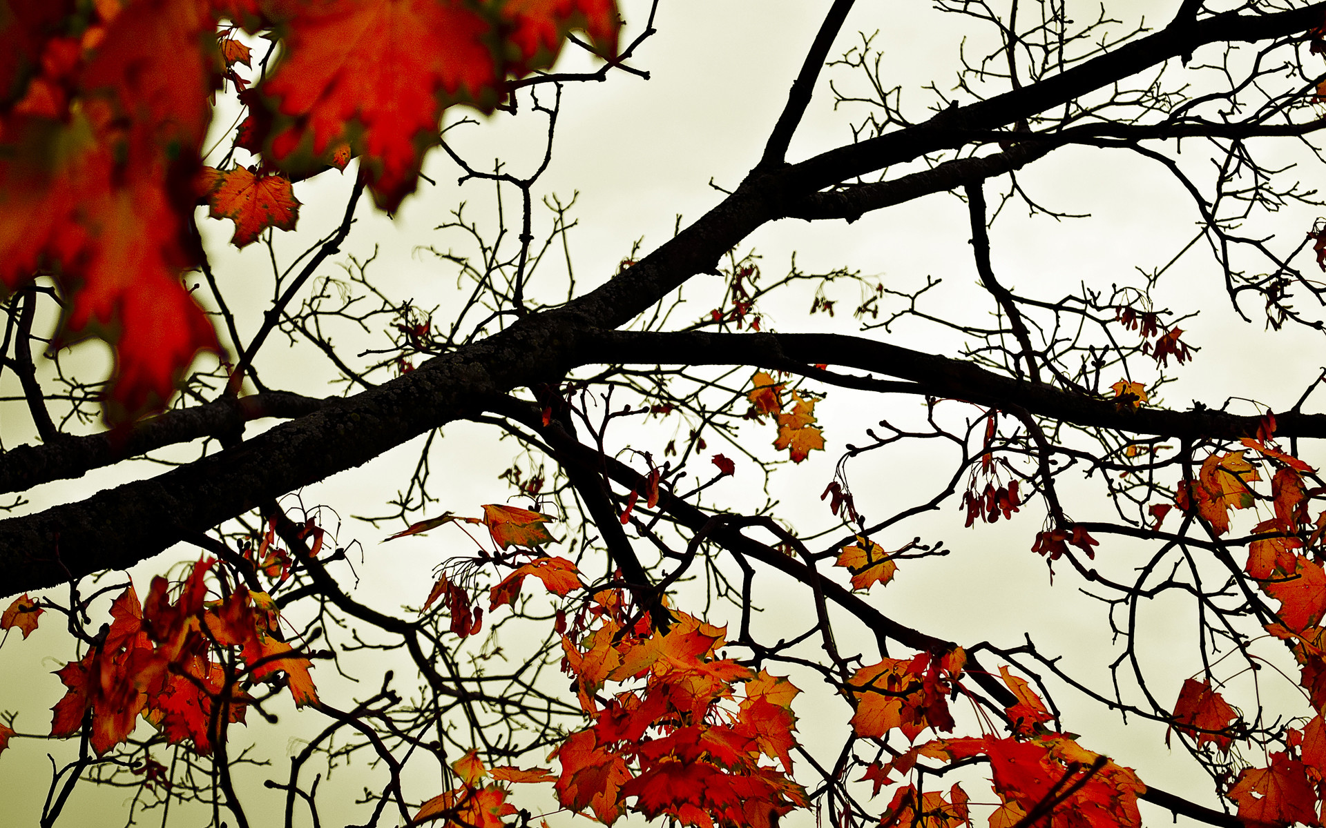 Autumn leaves desktop wallpapers and stock photos