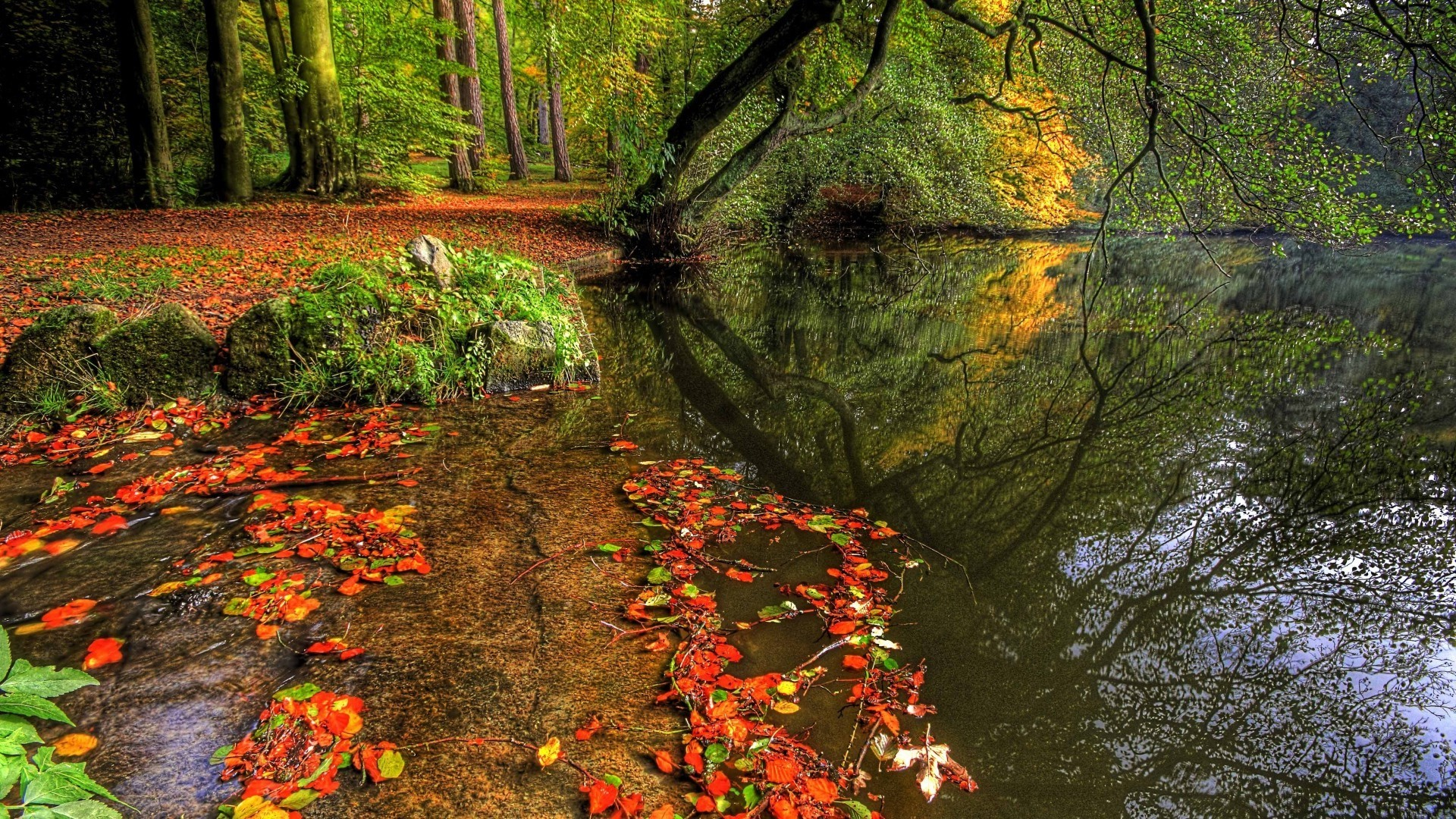 Natural Park Autumn Leaves Pond Trees Plate Full HD Desktop Wallpapers