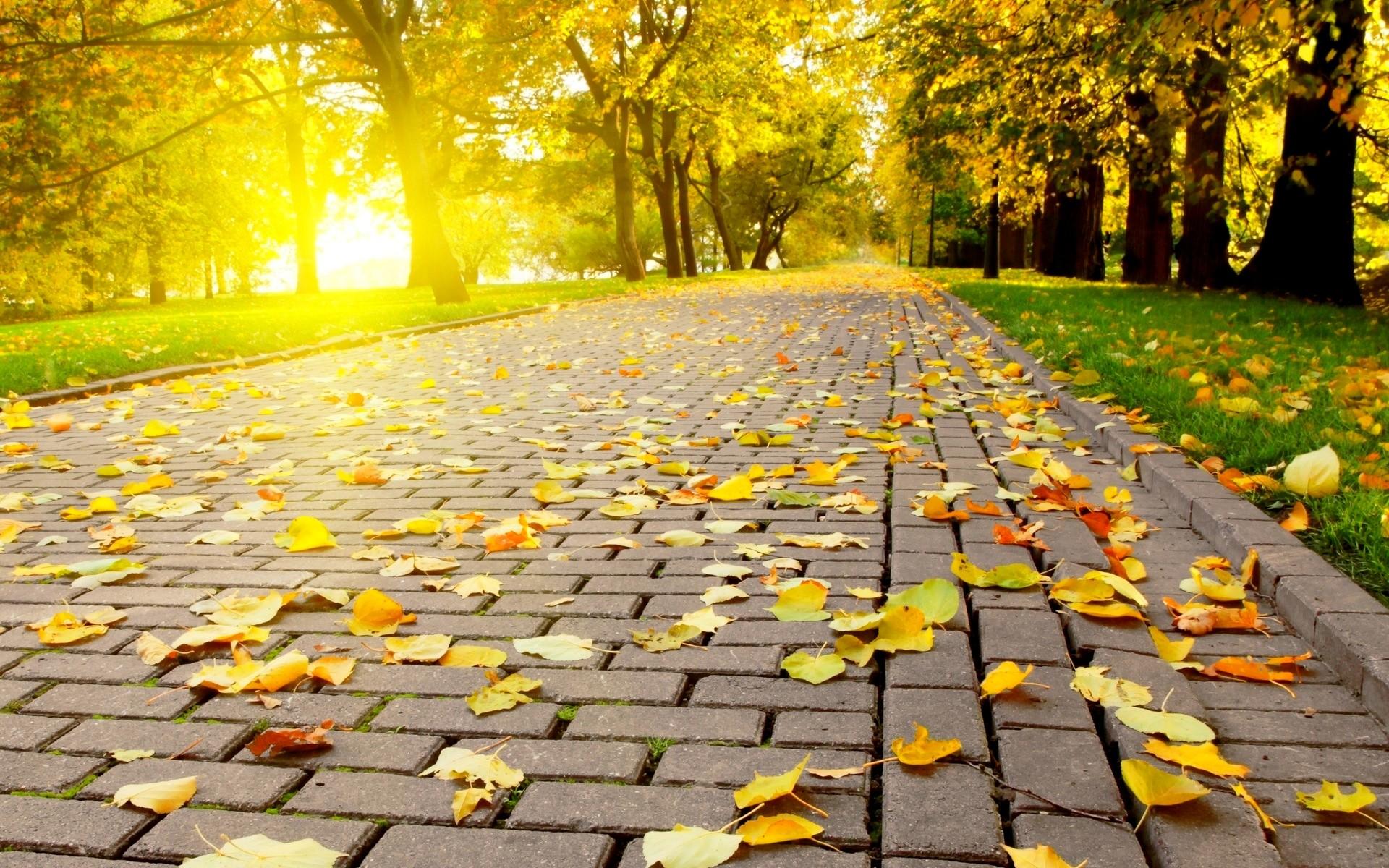 Wallpaper of Autumn Nature – https://whatstrendingonline.com/wallpaper-autumn