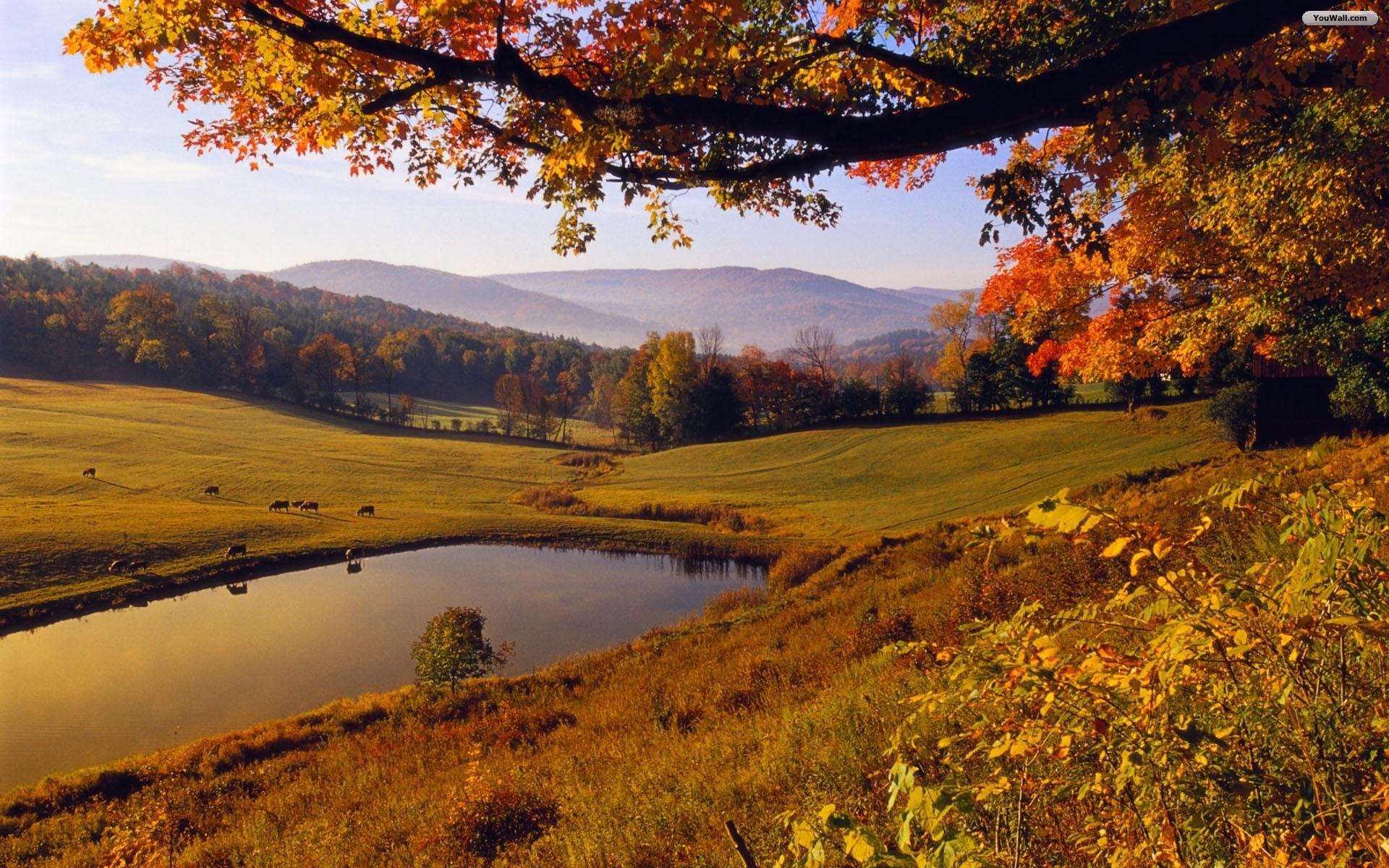 Landscape Wallpapers HD · Autumn TreesAutumn LeavesLandscape …
