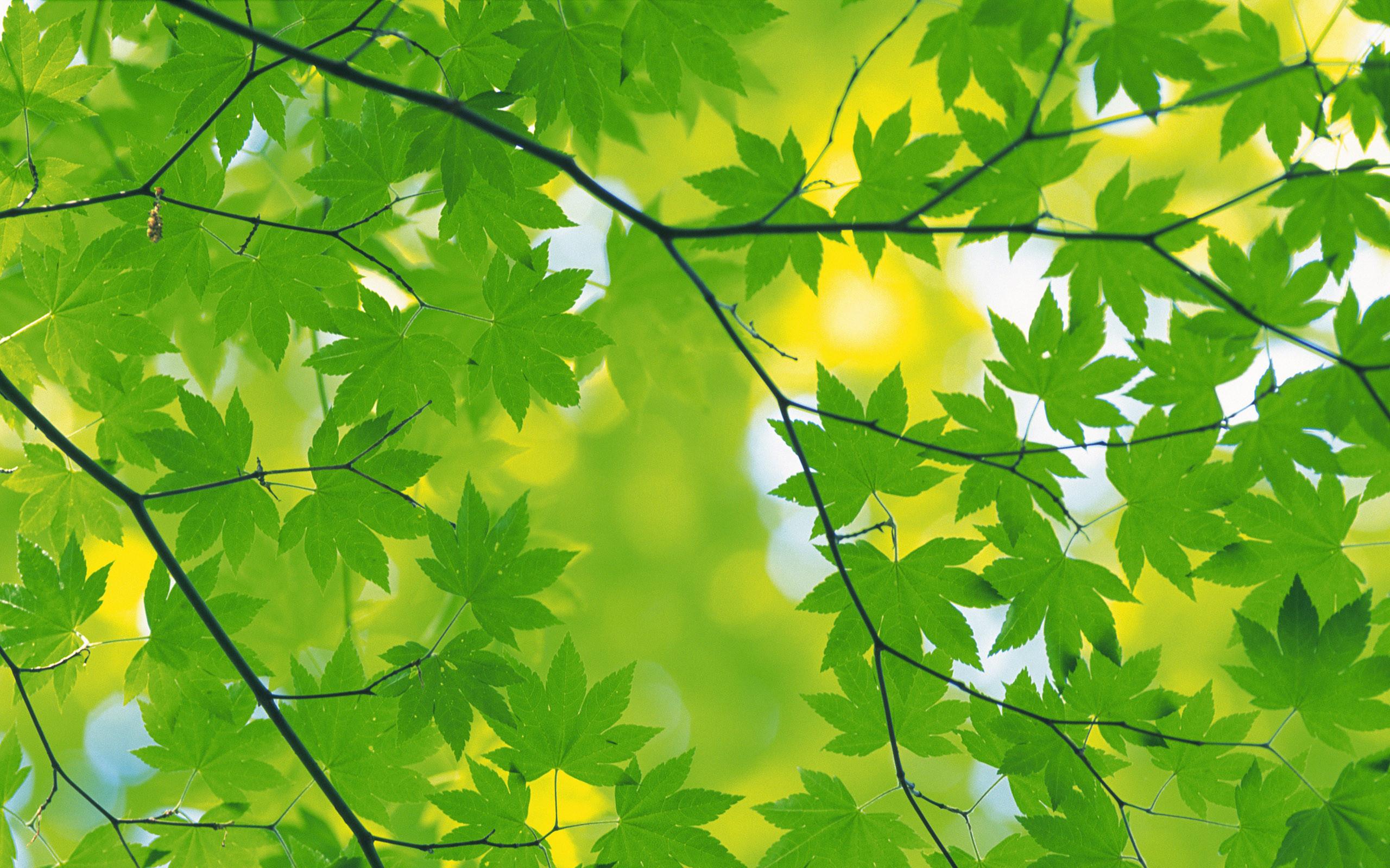 Leaf · Autumn Leaves Desktop Wallpaper …