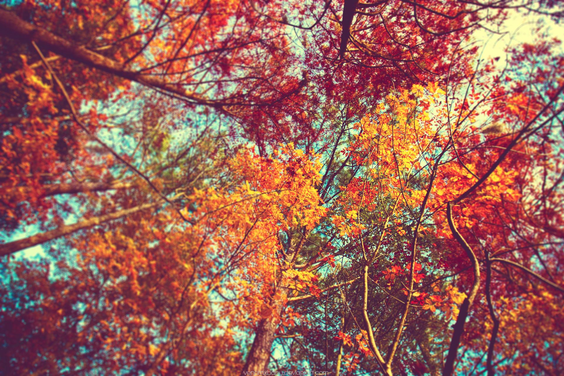 Autumn Trees Tumblr