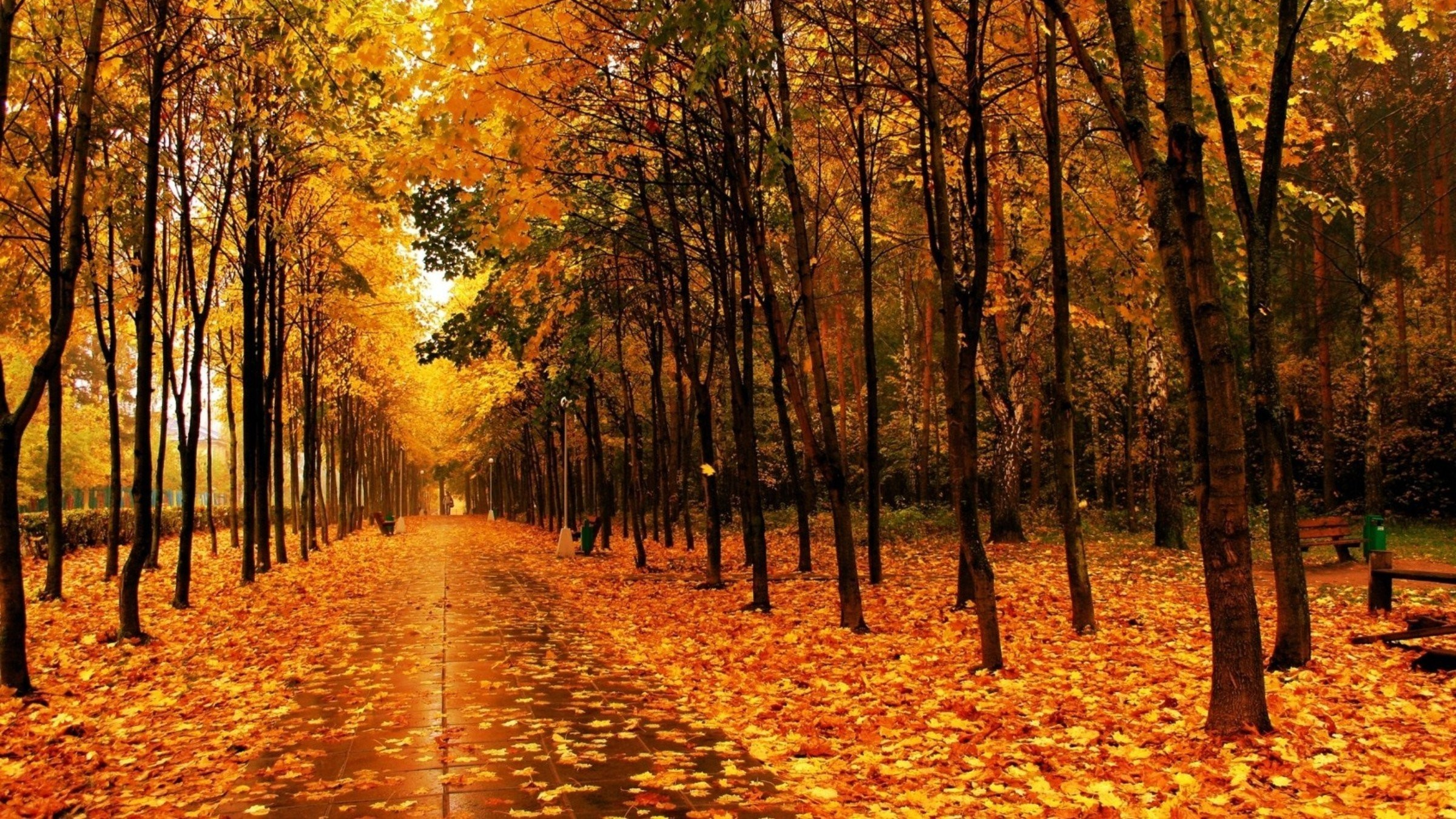 Landscape Autumn Forest Fall Path Tree Nature Trail Leaf Leaves Free Desktop  Wallpapers Of To Download – 2400×1350