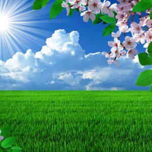 Spring Desktop Wallpaper Screensaver