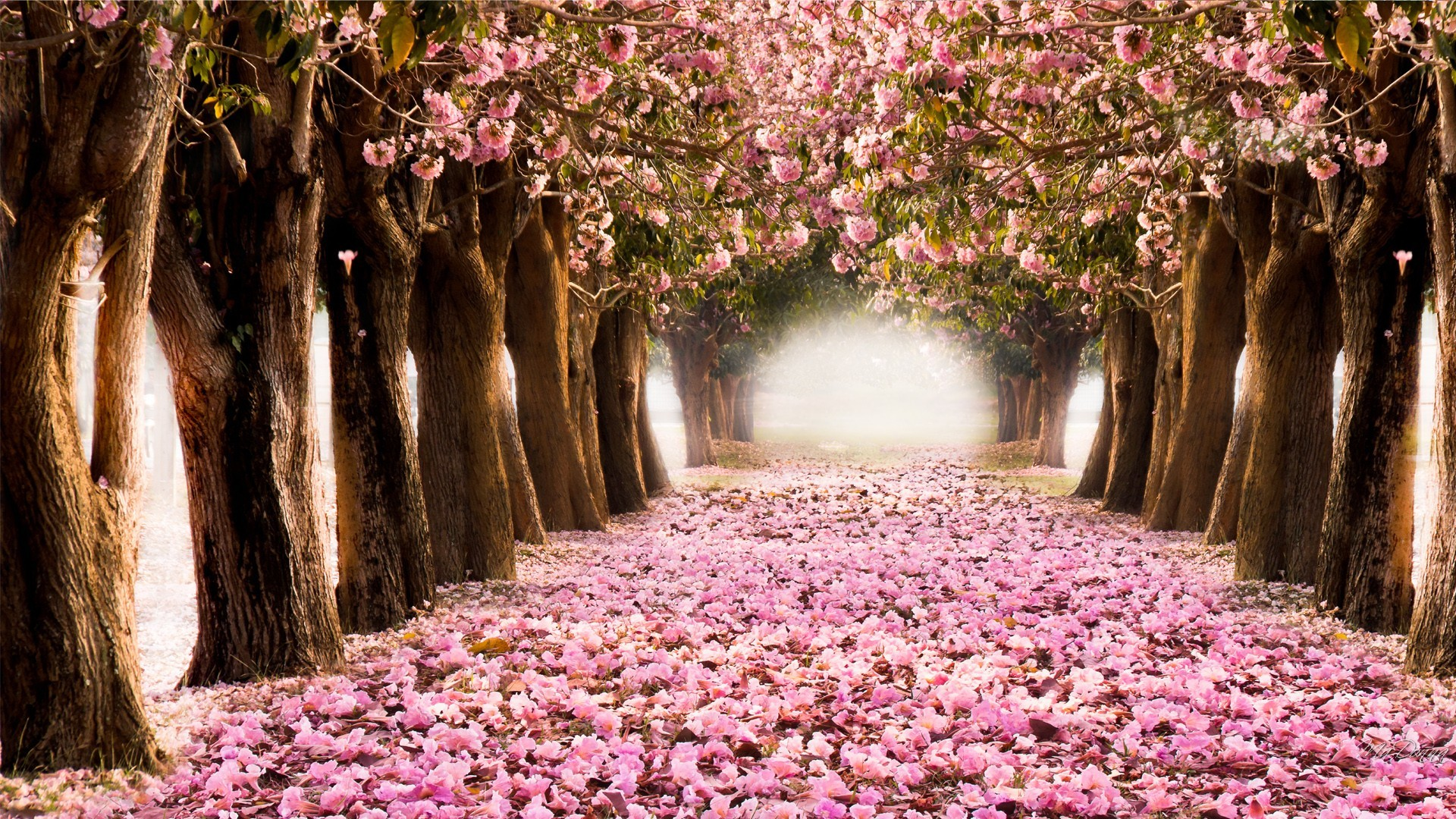 HQ Wallpapers Plus provides different size of Spring Trees And Flowers Desktop  Wallpapers. You can