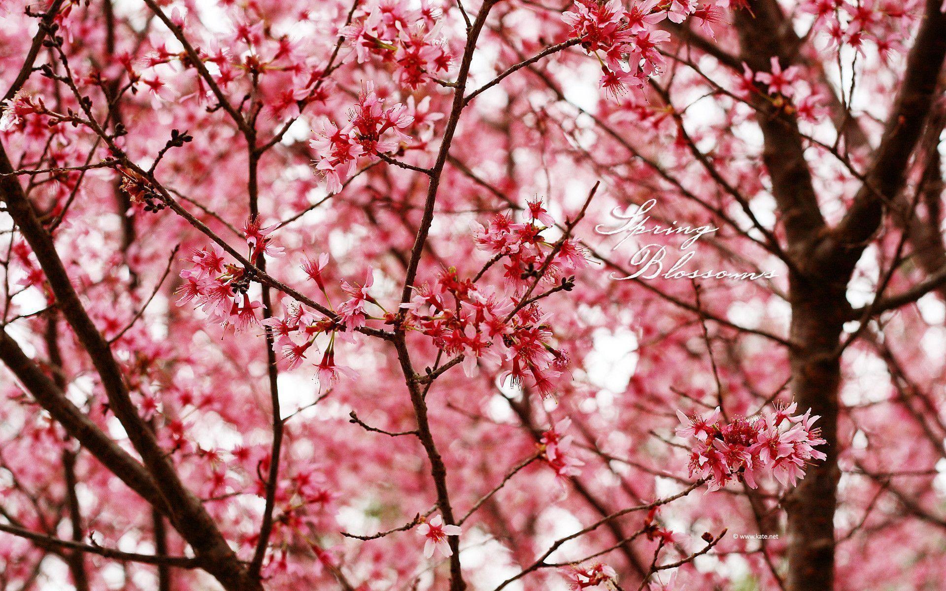 free spring screensavers and wallpaper
