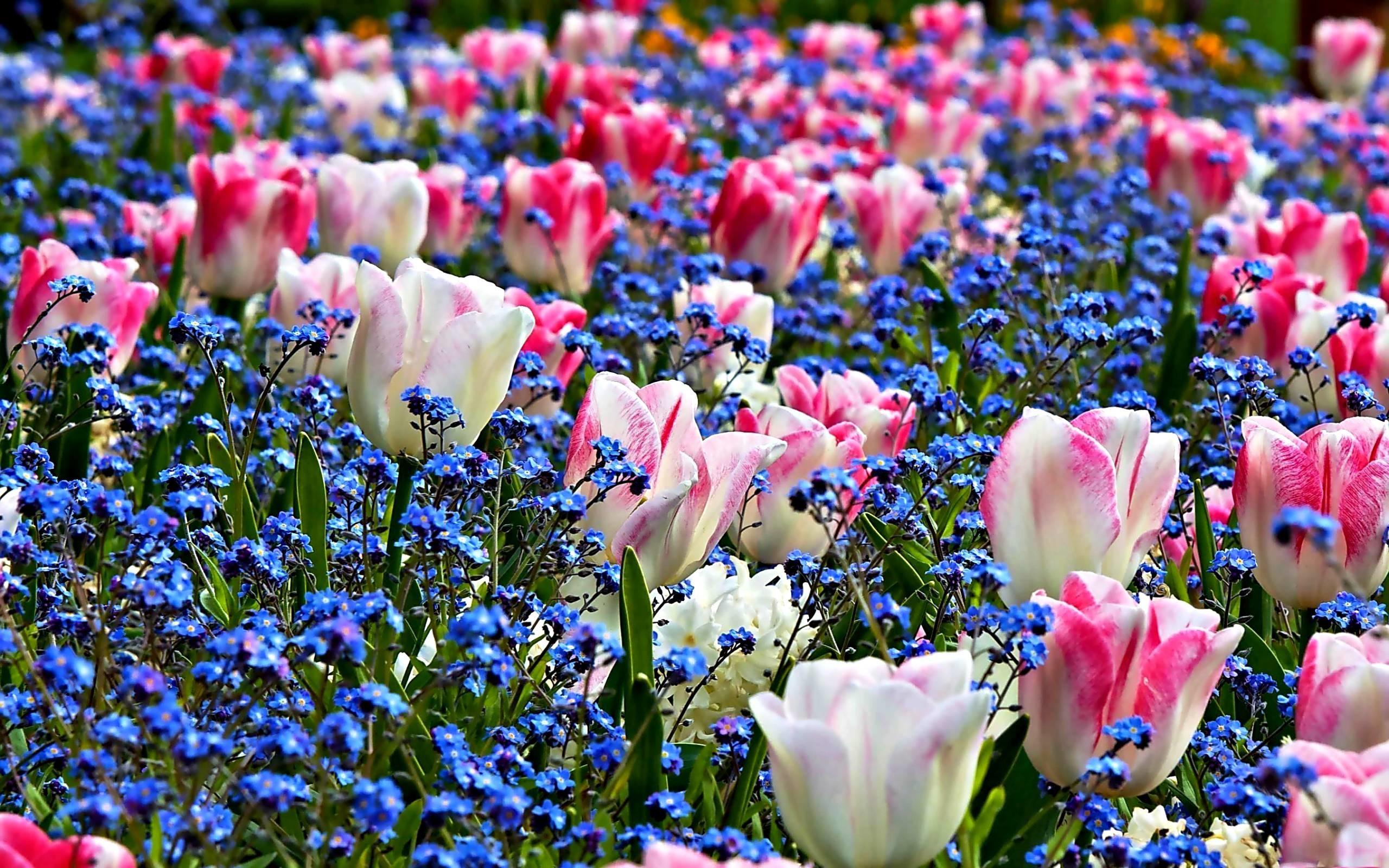 Spring Flowers Images Desktop Wallpaper : TimeDoll