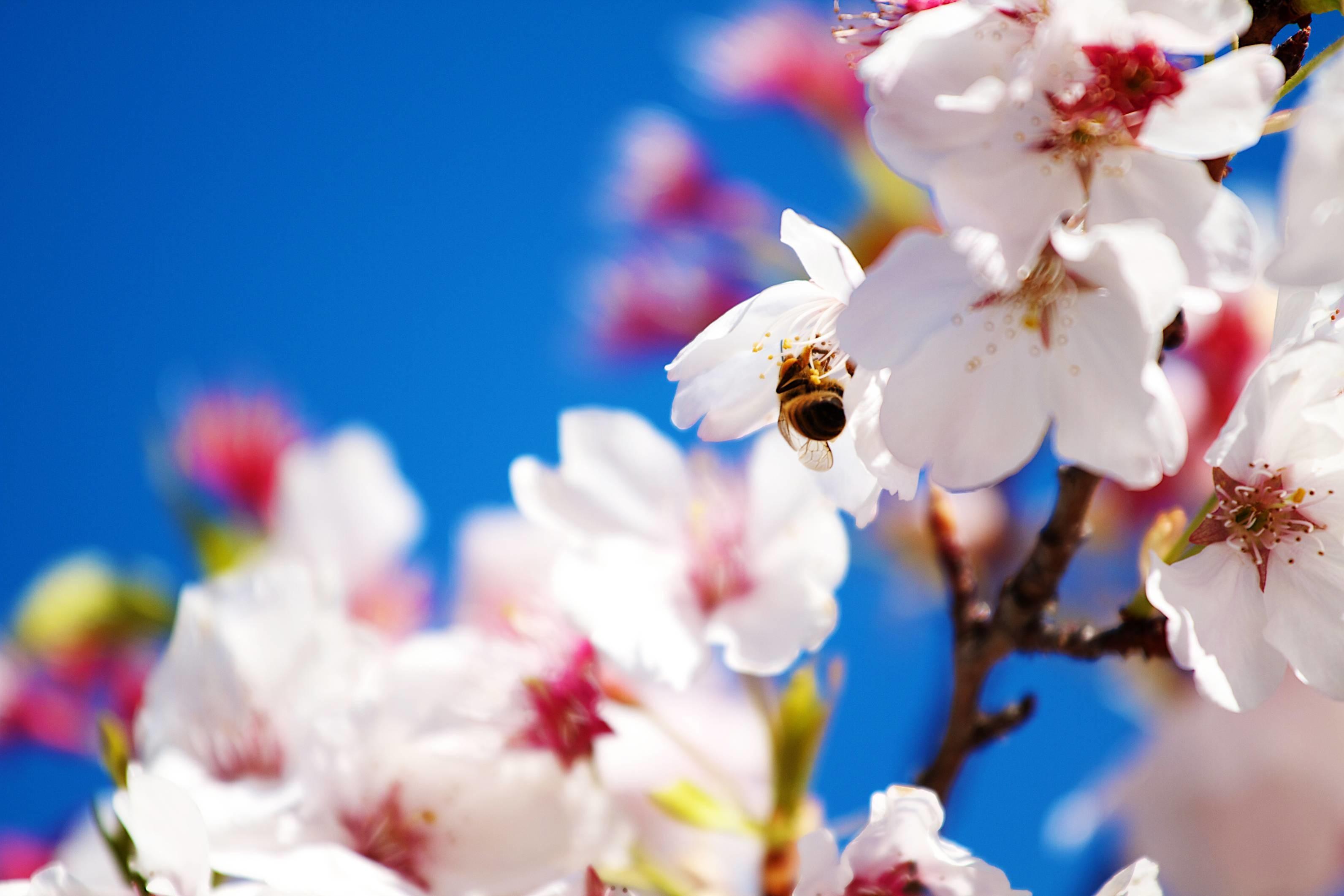 Free Desktop Wallpaper Spring Nature Scenes Flower
