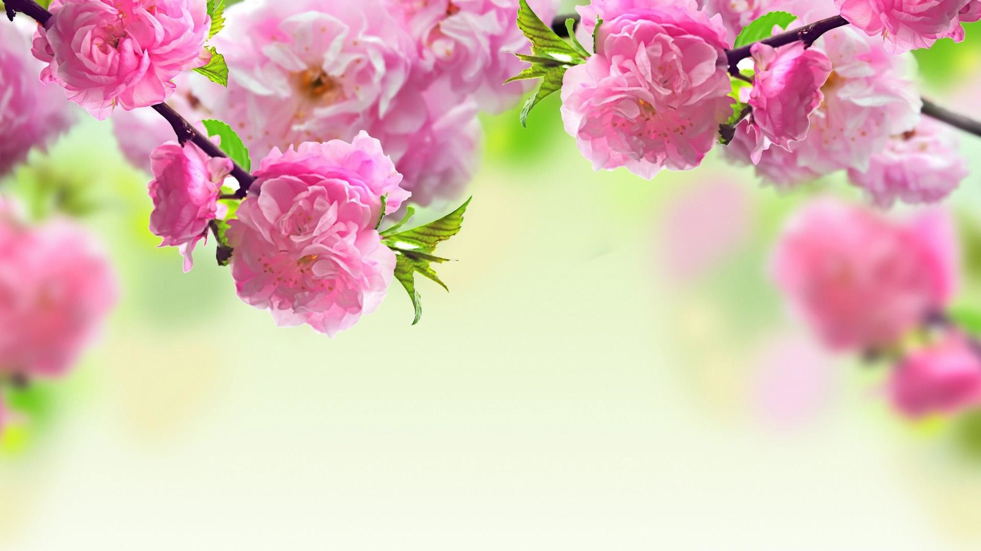 Feel Spring Atmosphere All Time With Spring Themed Wallpaper : Spring .