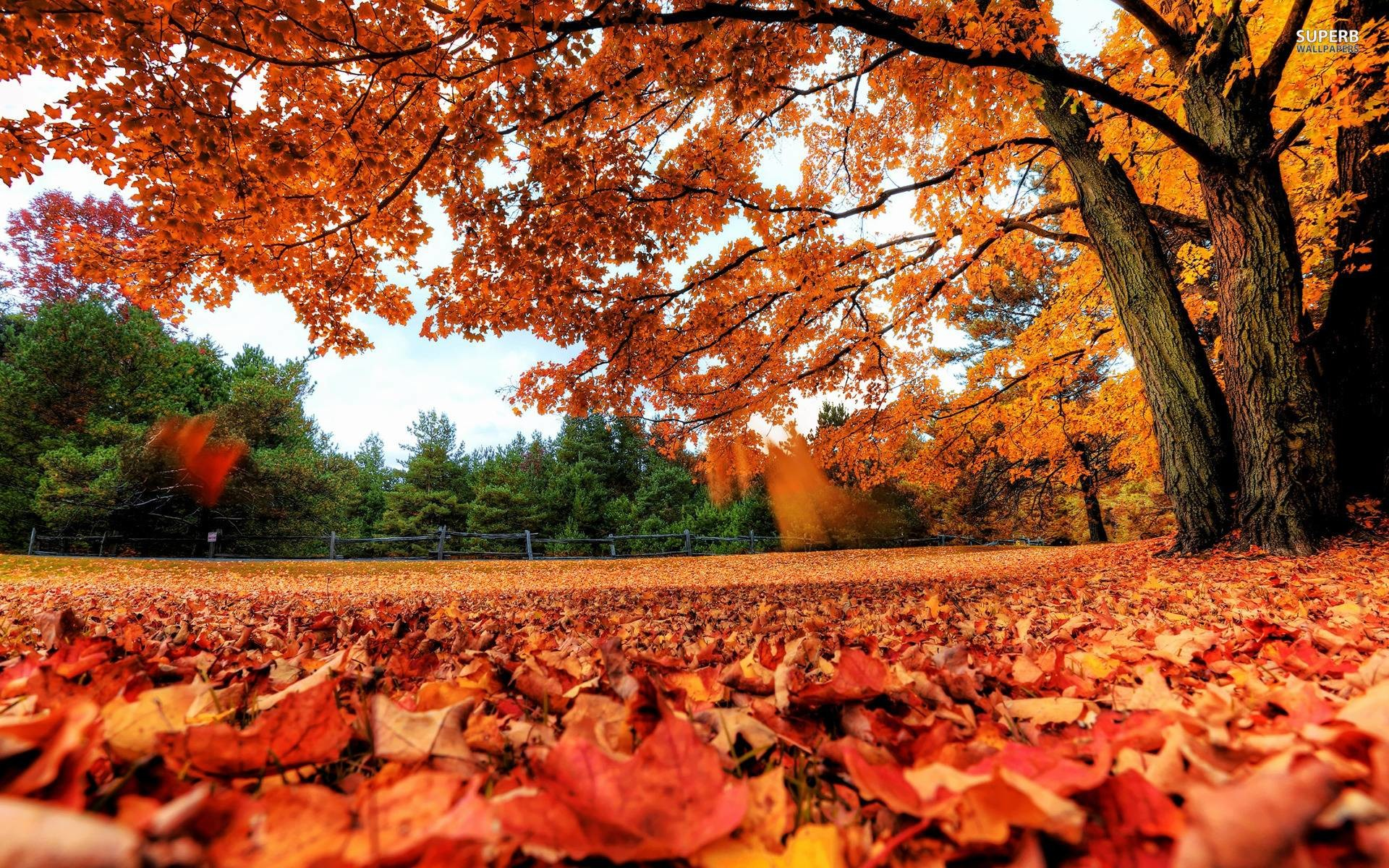 Red autumn leaves wallpaper – Nature wallpapers – #