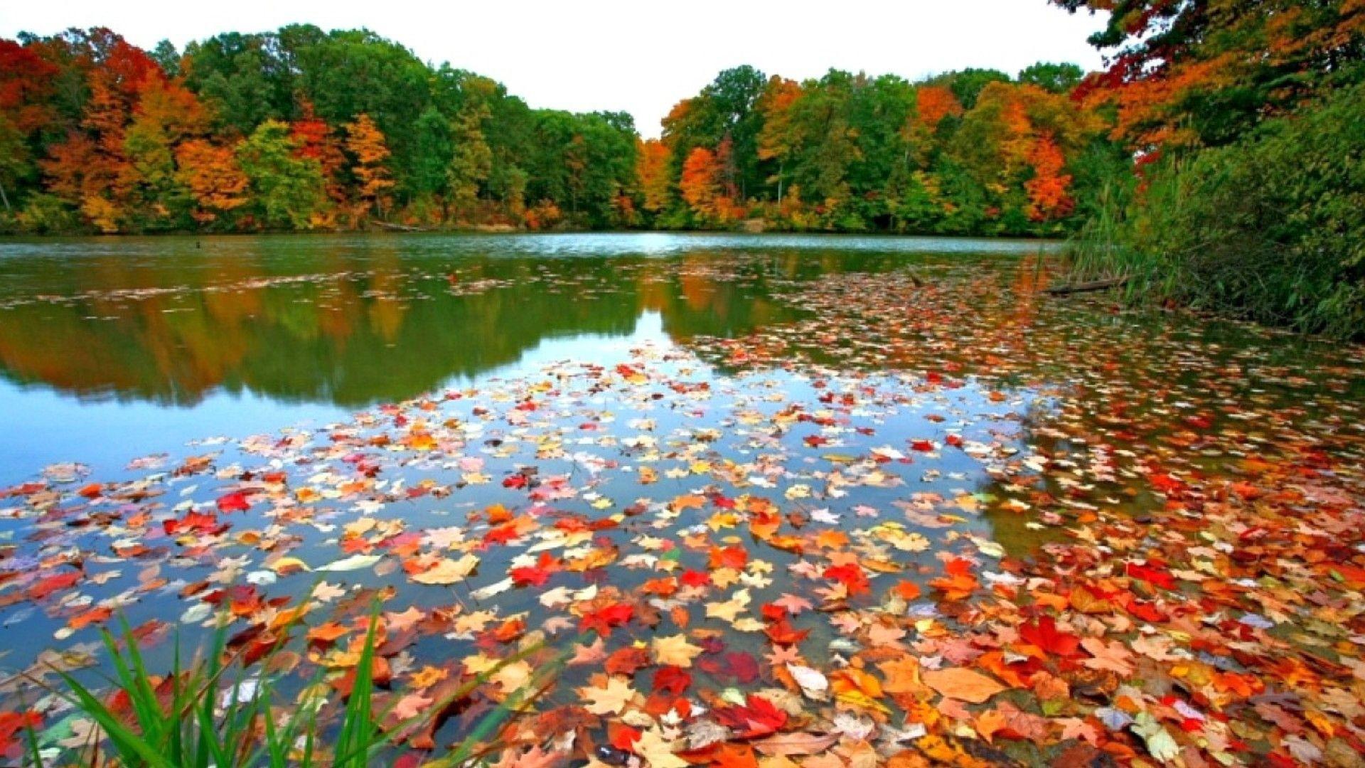 Fall Foliage Backgrounds.