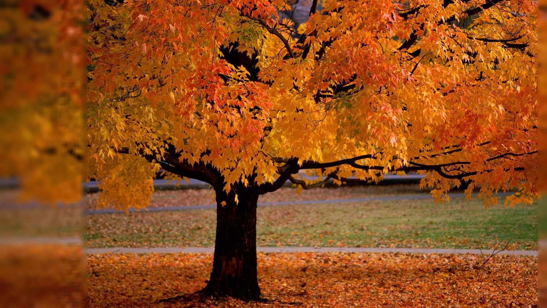 Autumn Desktop Backgrounds Wallpaper 1920x1080PX ~ Wallpaper Fall .