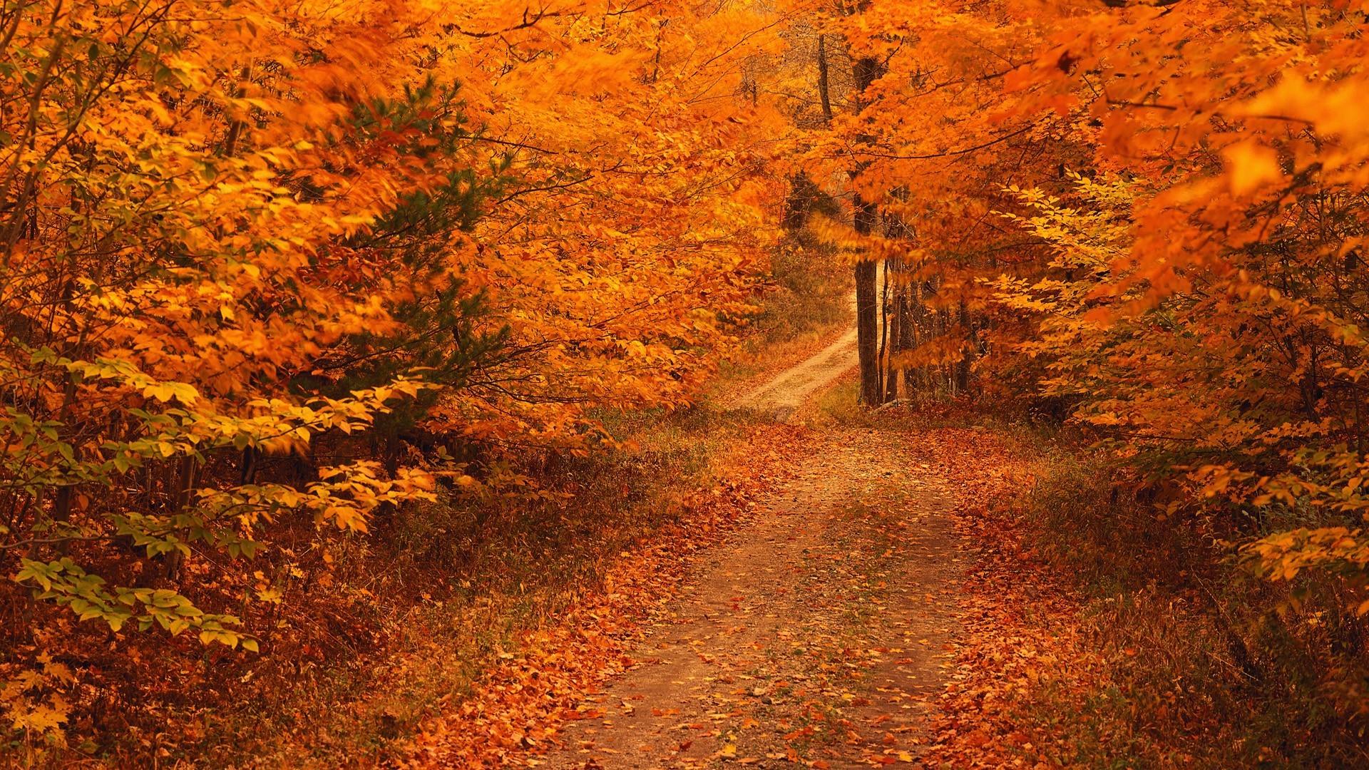 Fall Season Desktop Backgrounds | Desktop Image