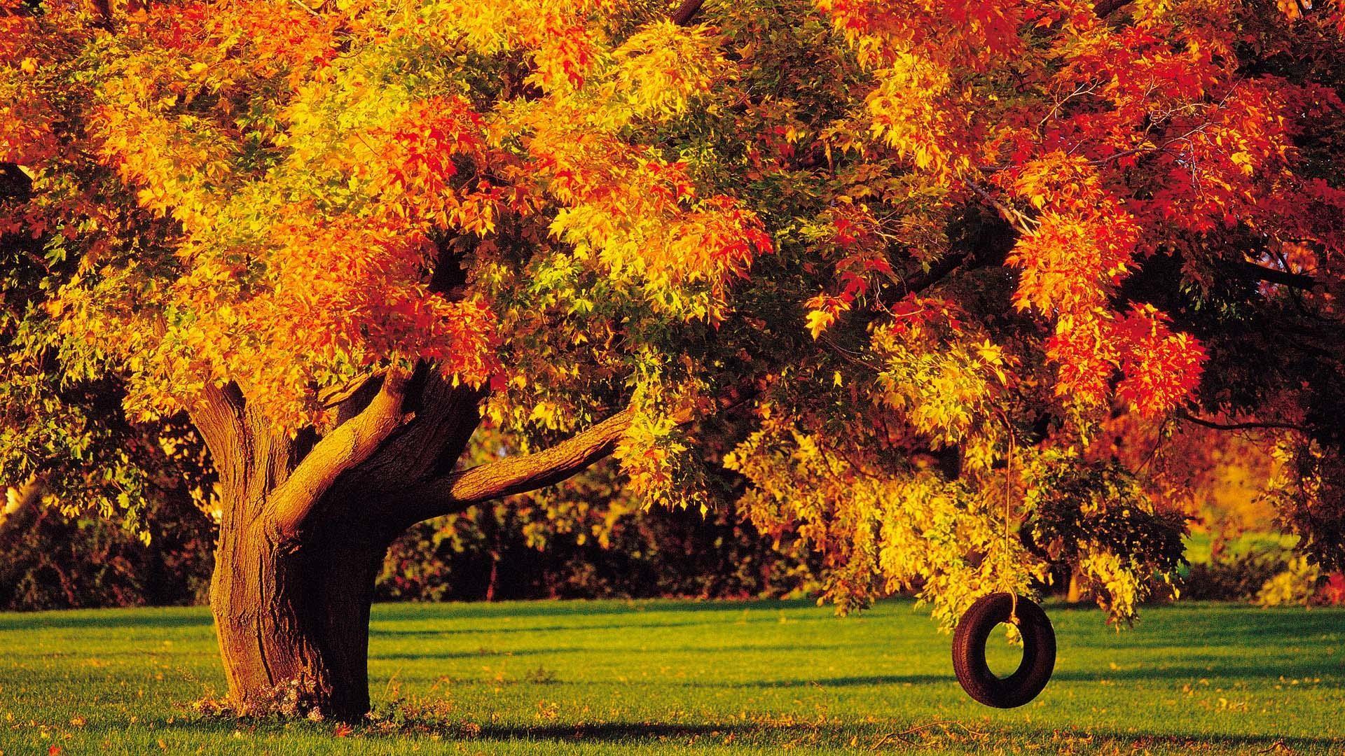 4. fall-foliage-wallpaper-for-desktop5-600×338