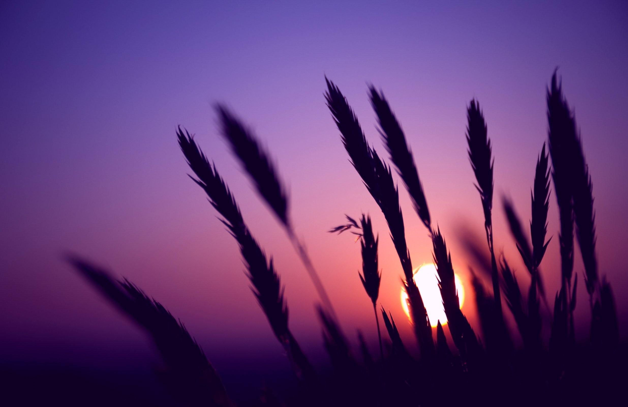 … purple-sunset-wallpapers-hd …