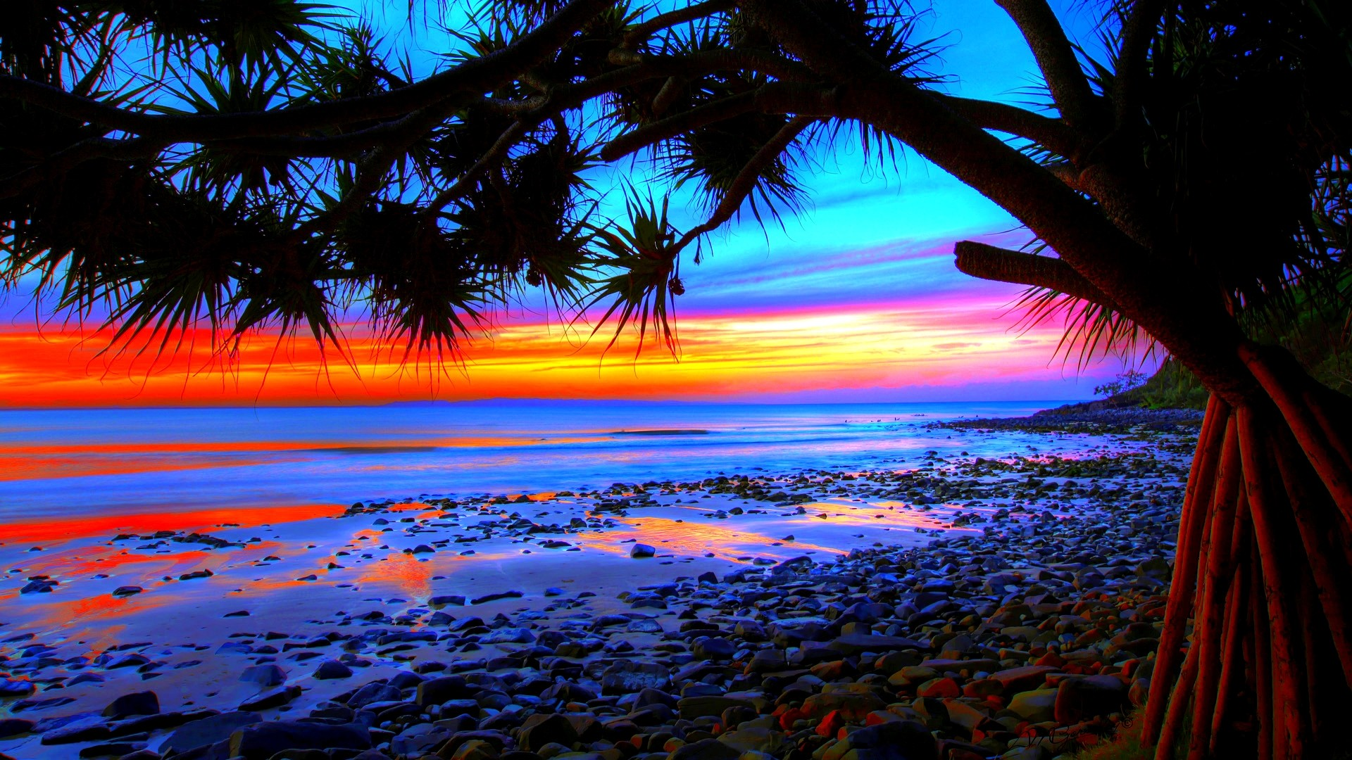 Palm Trees Sunset HD Wallpapers